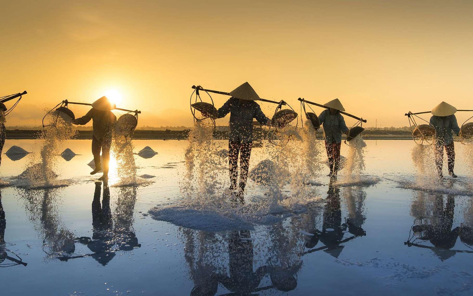 Au Vietnam, on produit du sel sur les côtes du pays, du nord au sud selon des techniques différentes. La période de la récolte du sel s'étale traditionnellement sur les mois les plus chauds de l'année, de janvier à juin. Le travail des ouvriers dans les marais salants est éprouvant. Et le cours du sel étant variable, la vie de ces saliniers est des plus instables. D'autant que la saliculture semble aujourd'hui de plus en plus menacée par le réchauffement climatique qui, apportant des pluies de plus en plus violentes, compromet régulièrement la production. © Quangpraha, Pixabay