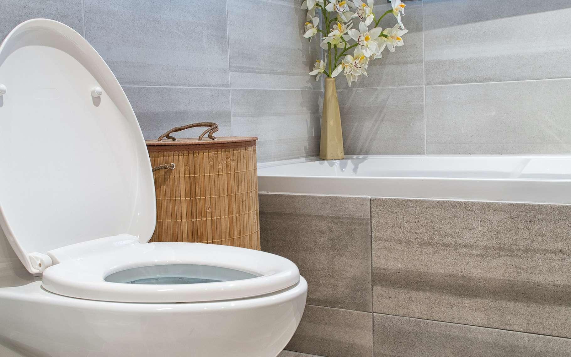 Des chercheurs de l'université de PennState (États-Unis) ont développé un matériau qui réduit drastiquement la quantité d'eau utile à nettoyer les toilettes. © DD Images, Adobe Stock