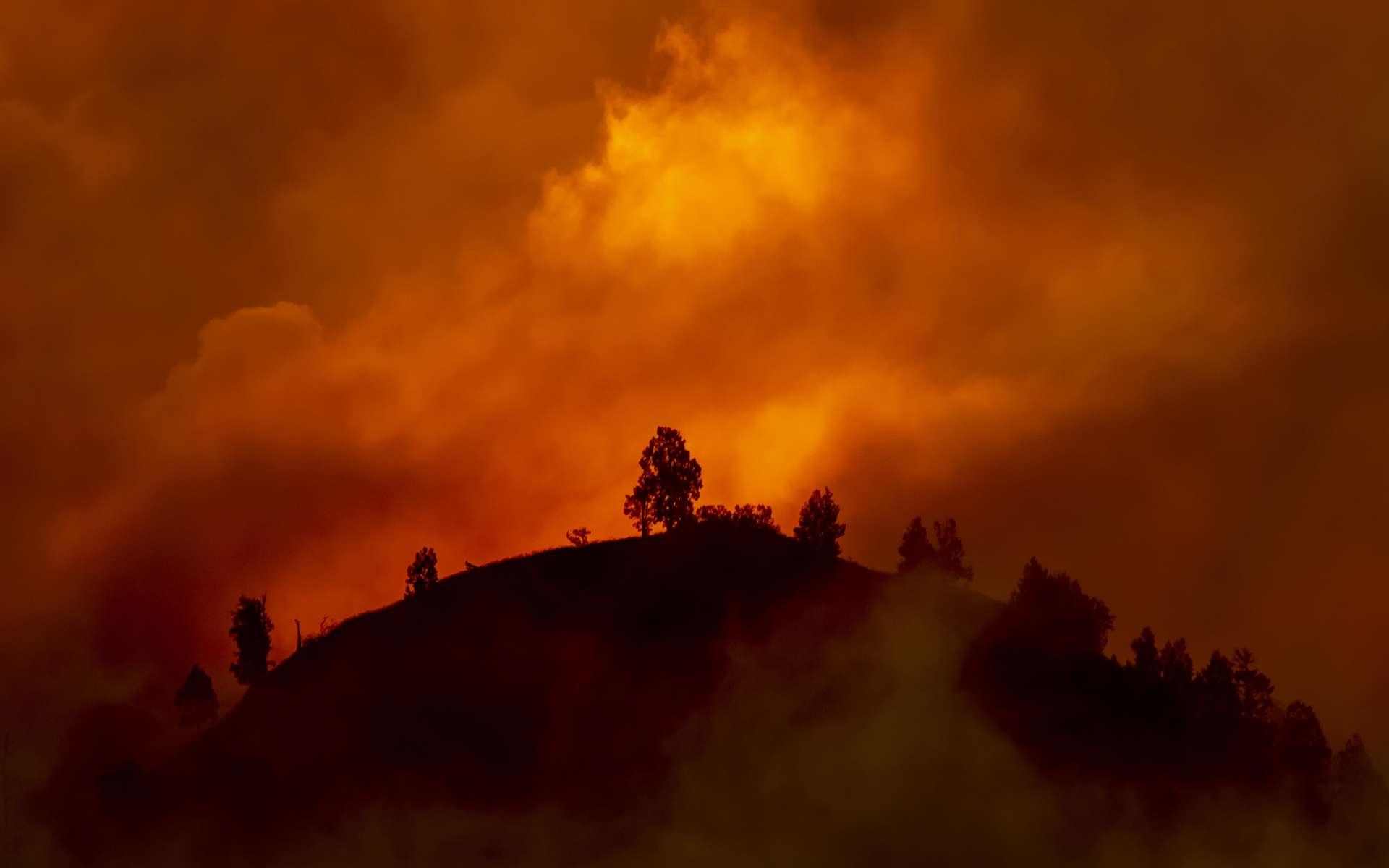 Selon différents experts, l'humanité devra désormais vivre dans le Pyrocène. © TheVagabond V.Schaal, Adobe Stock