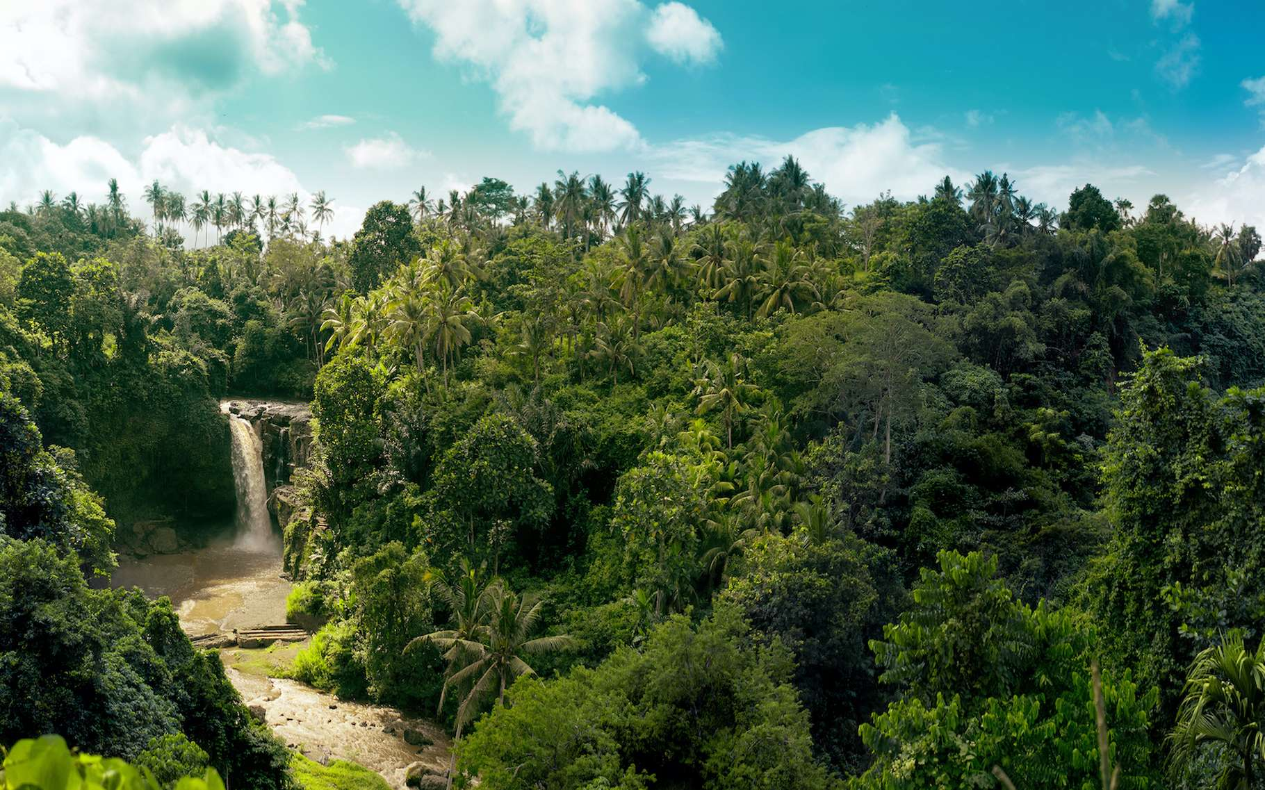Les forêts tropicales vierges stockent et séquestrent de grandes quantités de carbone atmosphérique, mais sont actuellement négligées dans la politique climatique internationale. © acarapi, Adobe Stock