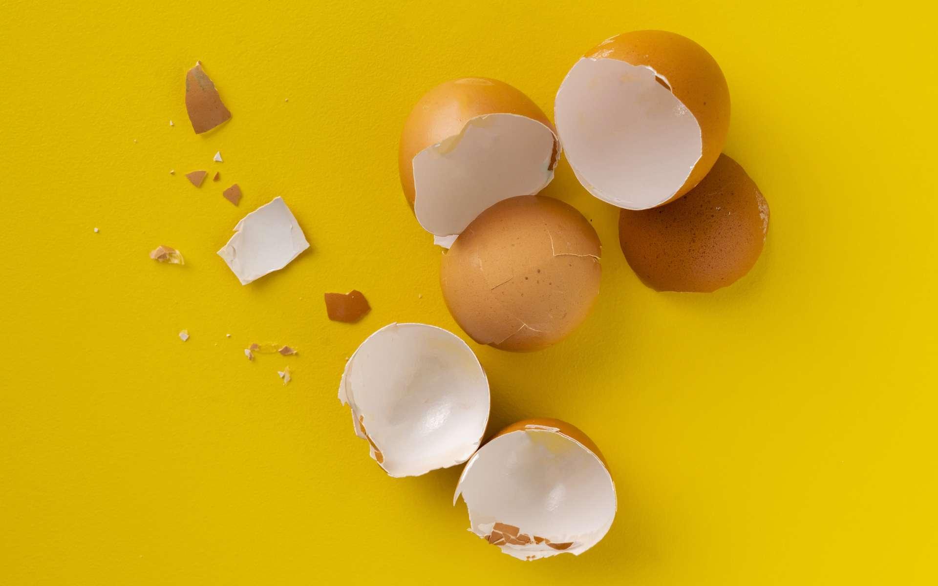 Comment remplacer les œufs ? © Mihail, Adobe Stock