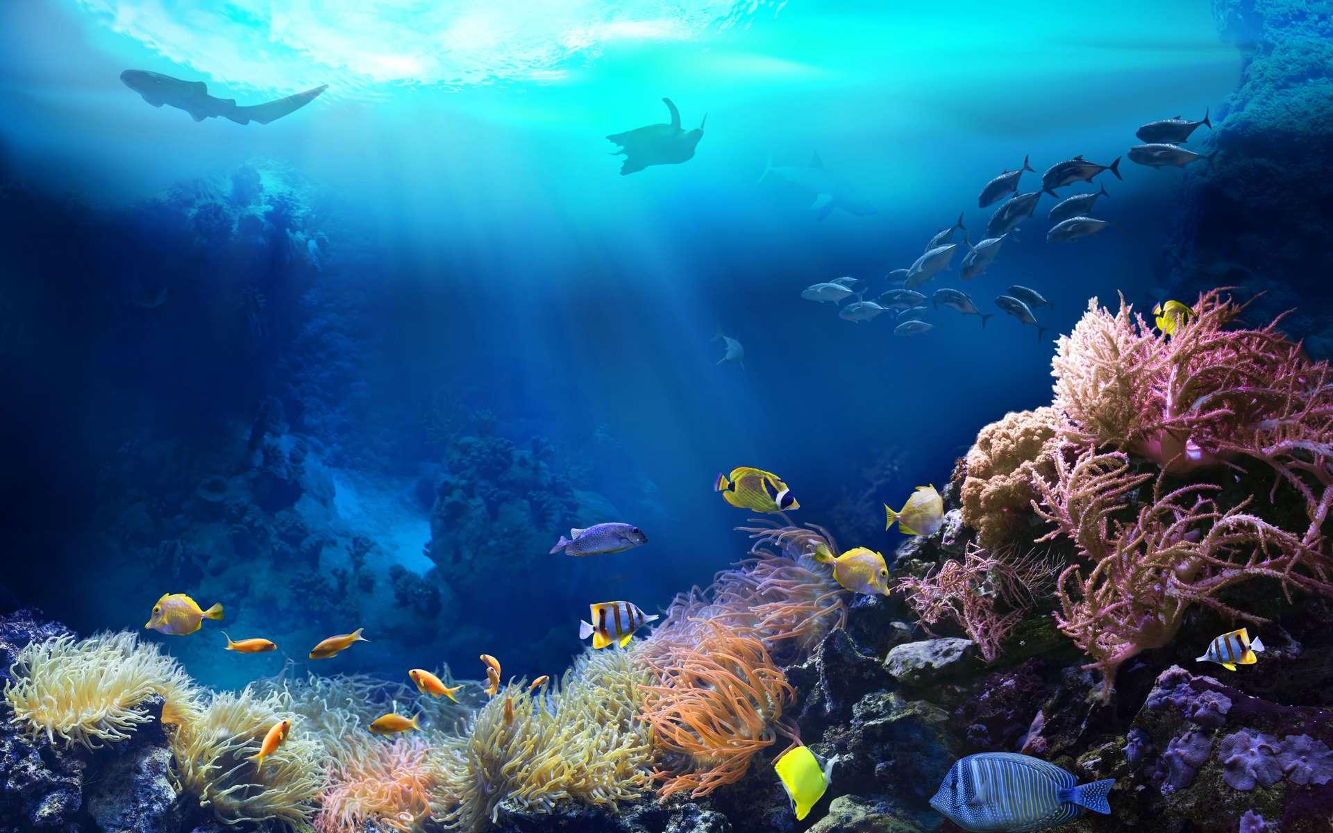 Les coraux verts sont les plus résistants face au blanchissement - Futura