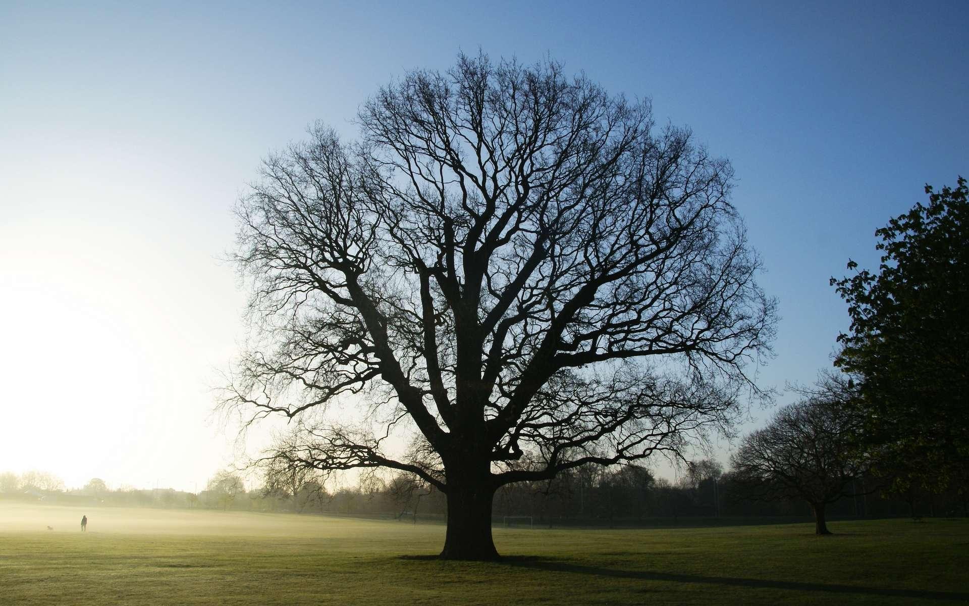 La dendrologie est la science qui étudie les arbres. © Martin Svedén, Flickr