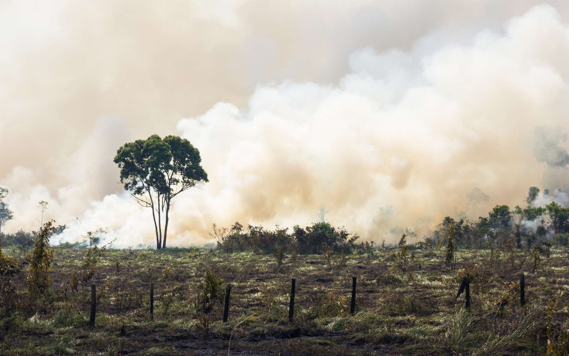De janvier à septembre 2019, l'Amazonie a perdu 7.853 km² de forêt partis en fumée. © Pedarilhos, Adobe Stock