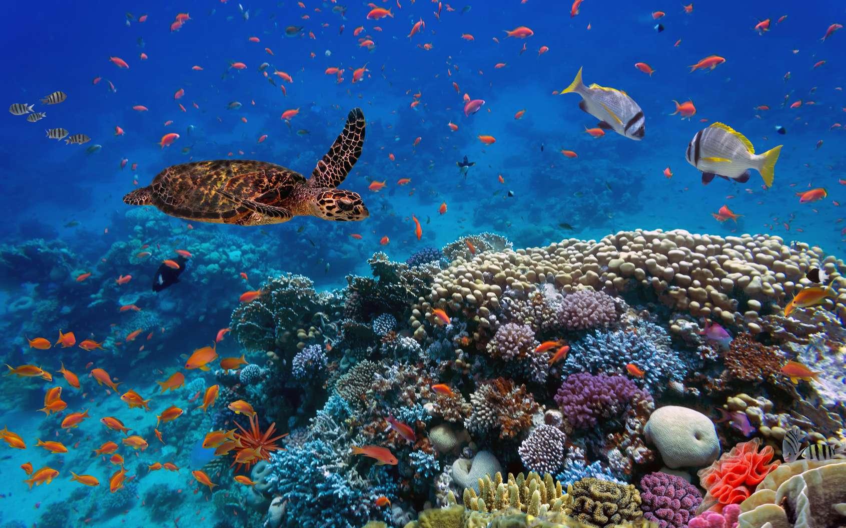 Qu'est-ce que la biodiversité ? © vlad61_61, fotolia