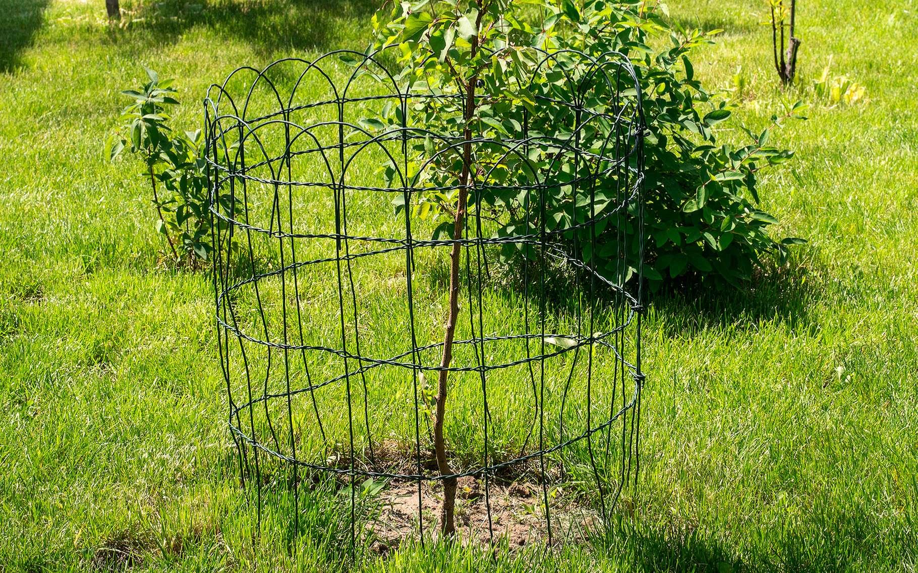 Après la plantation d'un arbre, il peut être nécessaire de le tuteurer et de le protéger d'éventuels animaux qui voudraient manger ses feuilles ou son écorce. © Krystyna Taran, Shutterstock