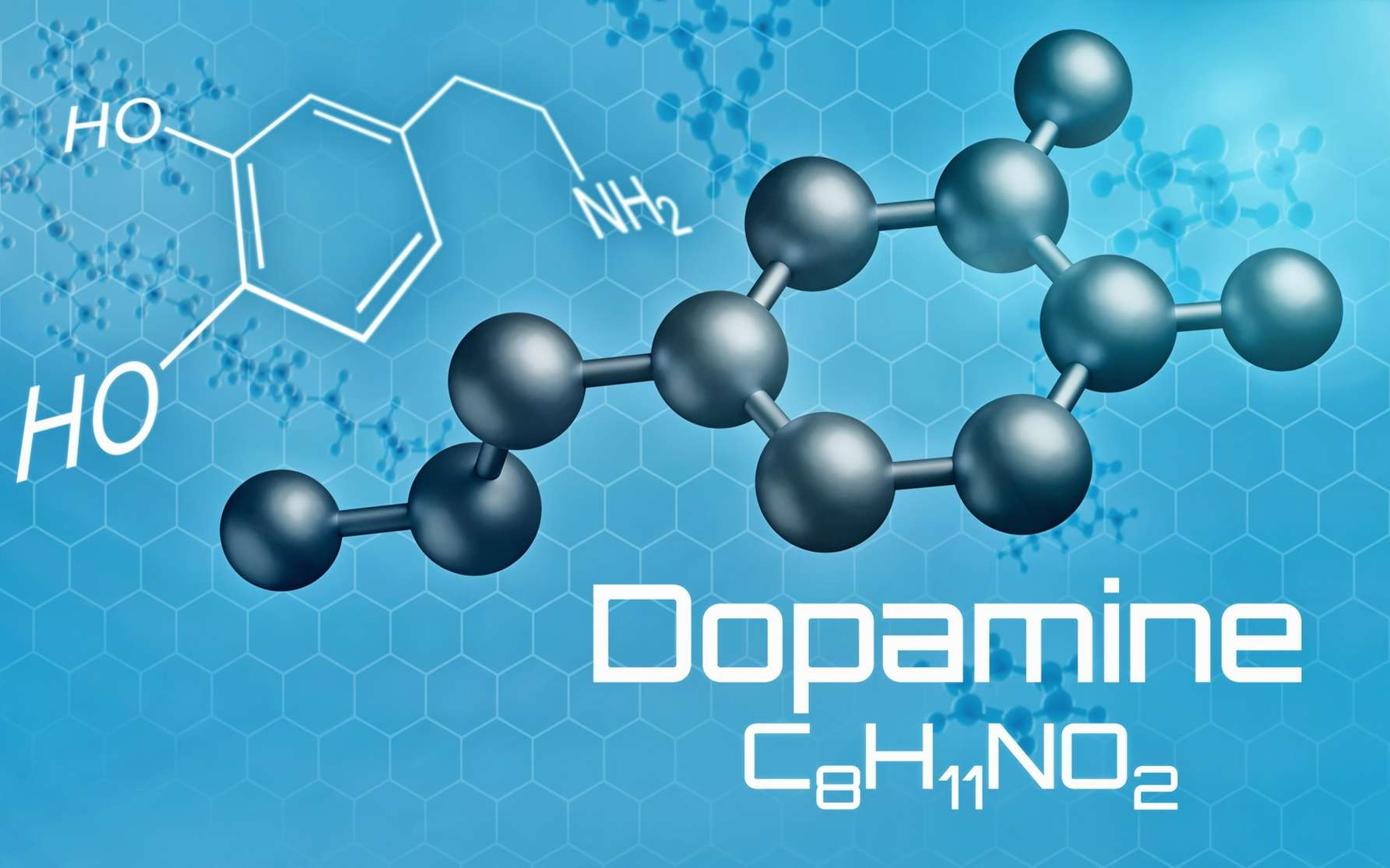 La dopamine est le principal neurotransmetteur impliqué dans le circuit de la récompense. © Zerbor, Fotolia