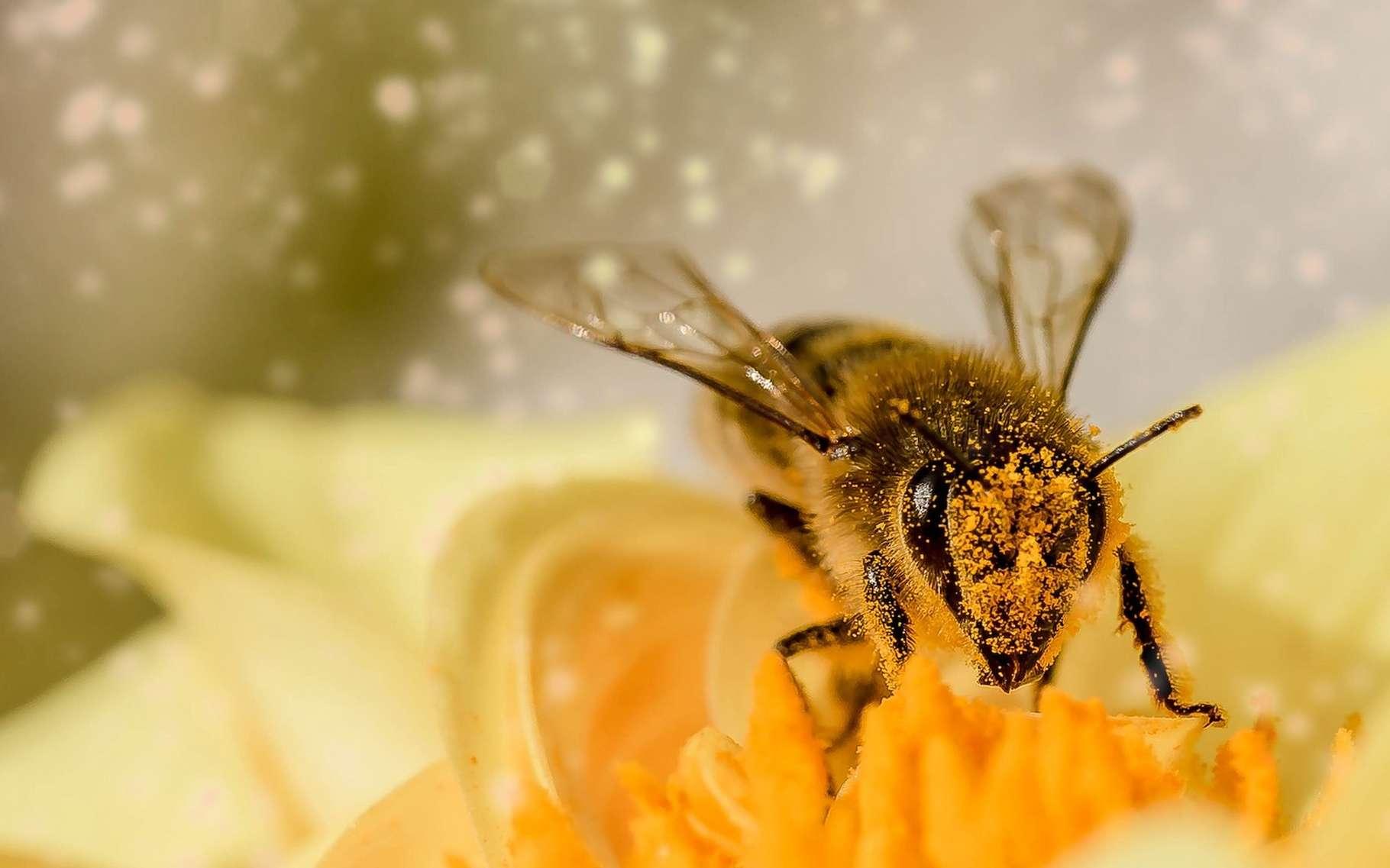 Une étude suggère que l'agriculture biologique peut atténuer les effets négatifs de l'agriculture intensive et favoriser la survie des abeilles. © Myriams-Fotos, Pixabay License