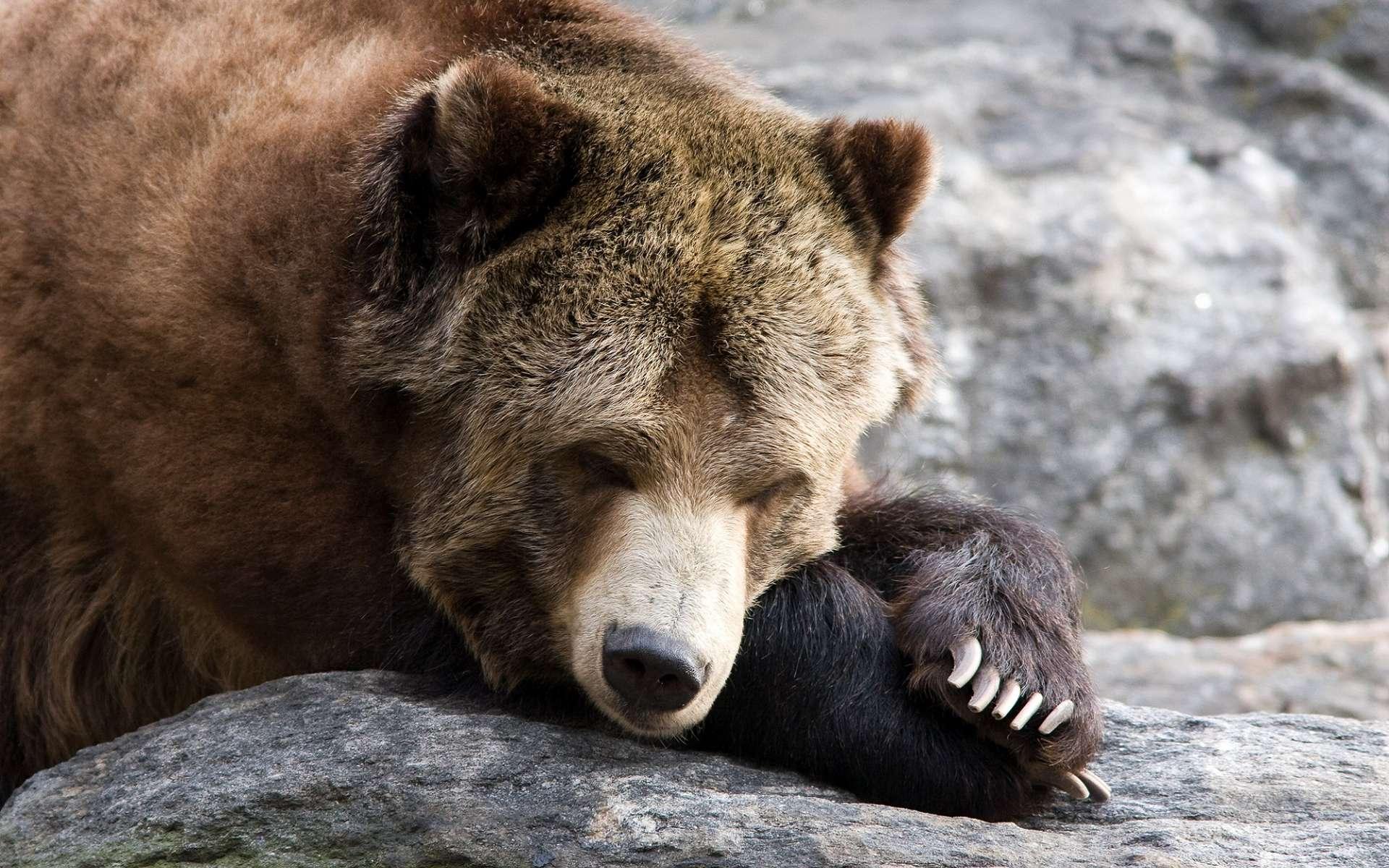 Le tissu adipeux brun permet aux animaux qui hibernent de se réchauffer. © Raj Krish, Shutterstock
