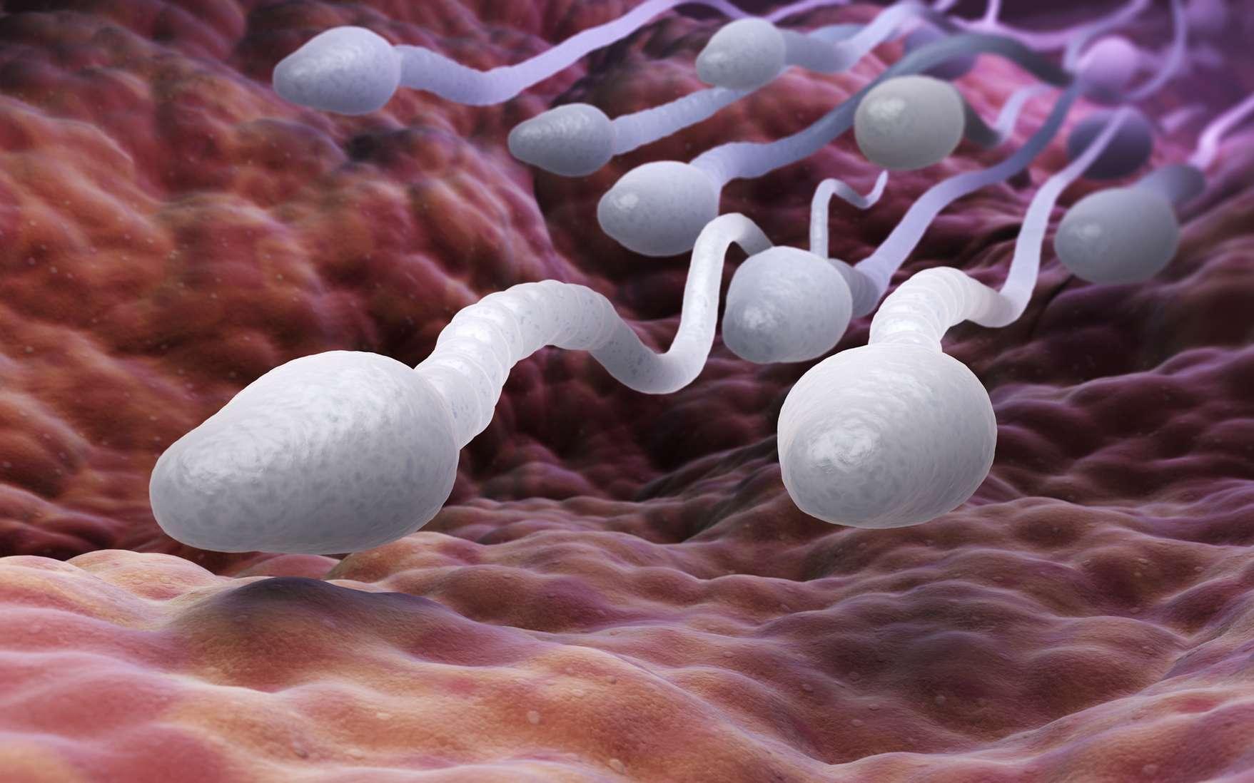 La concentration en spermatozoïdes du sperme a baissé de 52,4 % entre 1973 et 2011. © Tatiana Shepeleva, fotolia
