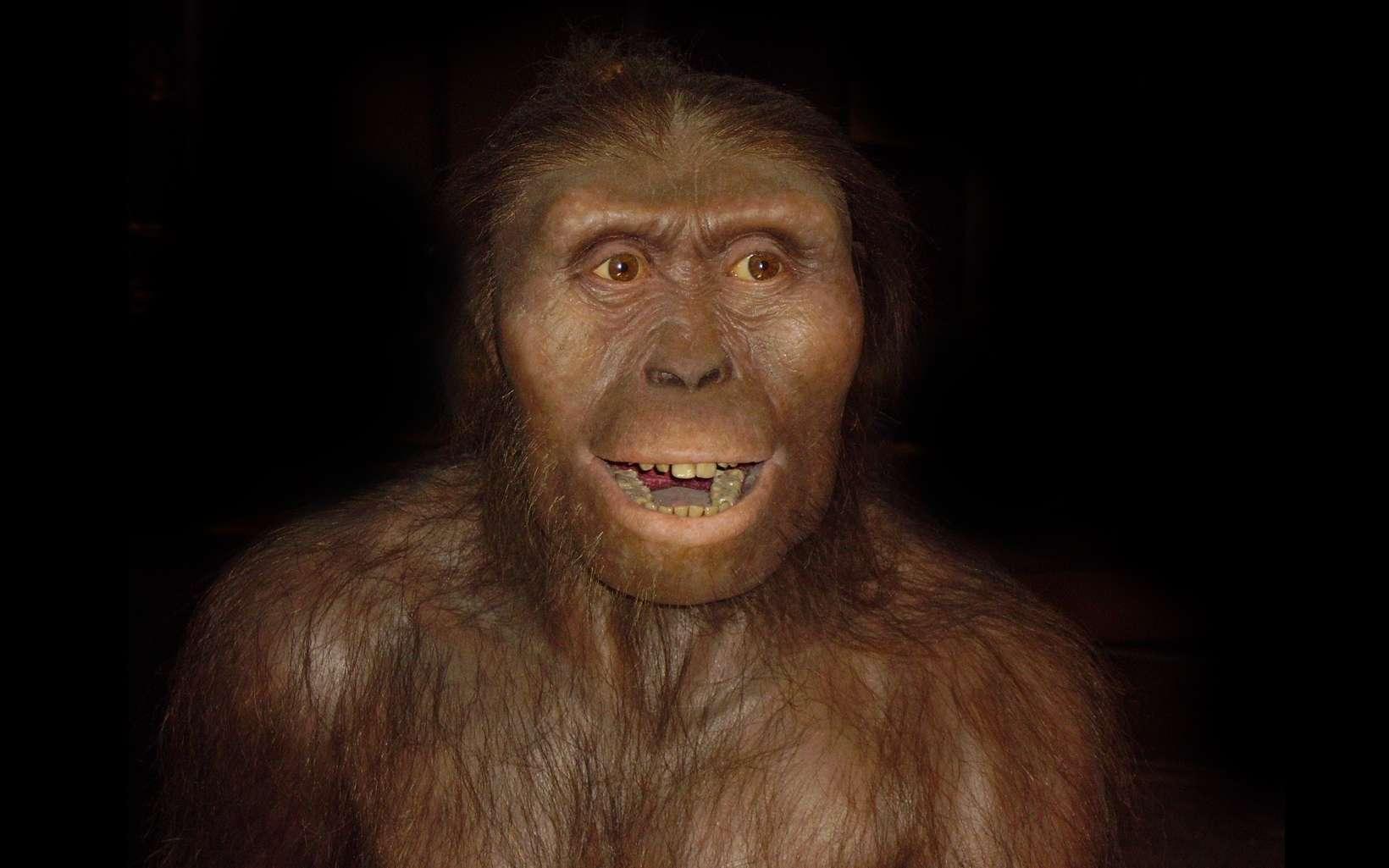 L'australopithèque le plus célèbre est Lucy. © Wikimedia Commons, CC asa 3.0