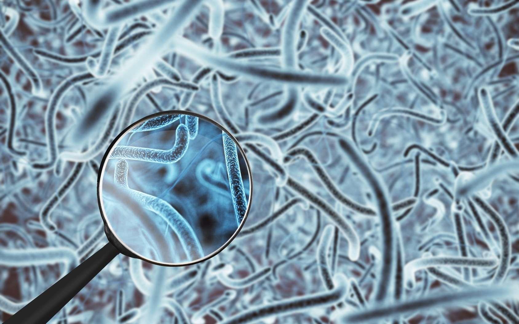 Il est difficile d'y voir clair dans les relations entre microbiote et maladie. © DR