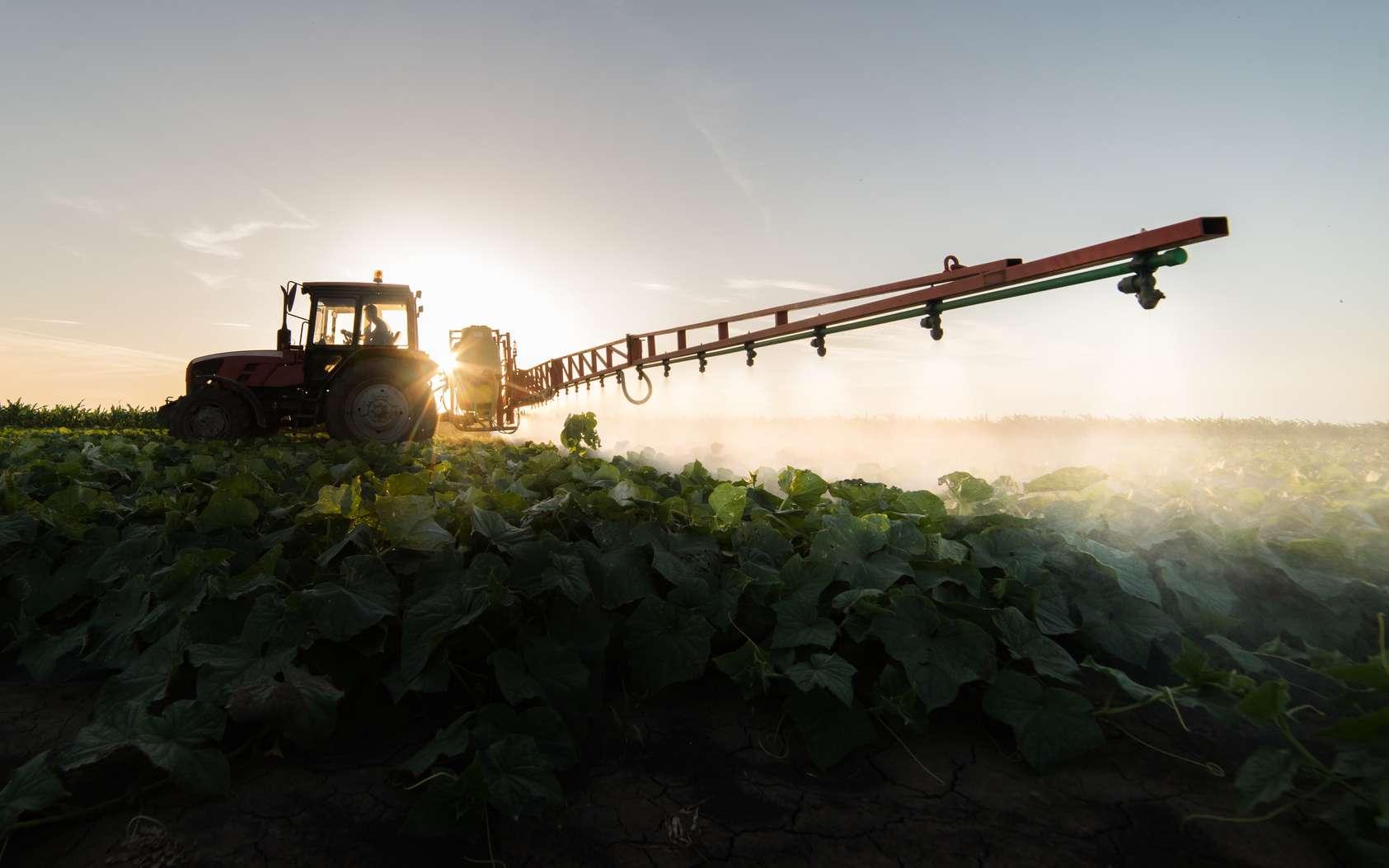Le Costa Rica est le premier utilisateur de pesticides par hectare. © Dusan Kostic, Fotolia