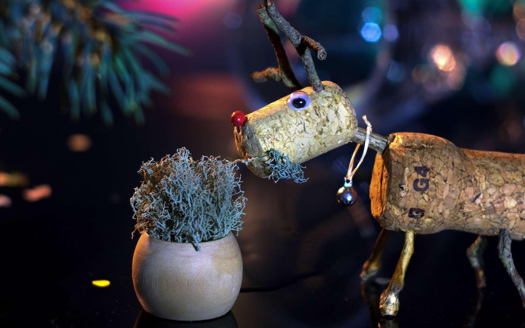 Des chercheurs suggèrent que le nez rouge et brillant du Rudolph serait le résultat d'un phénomène de bioluminescence plutôt classique. © Vasilijus, Pixabay, CC0 Creative Commons