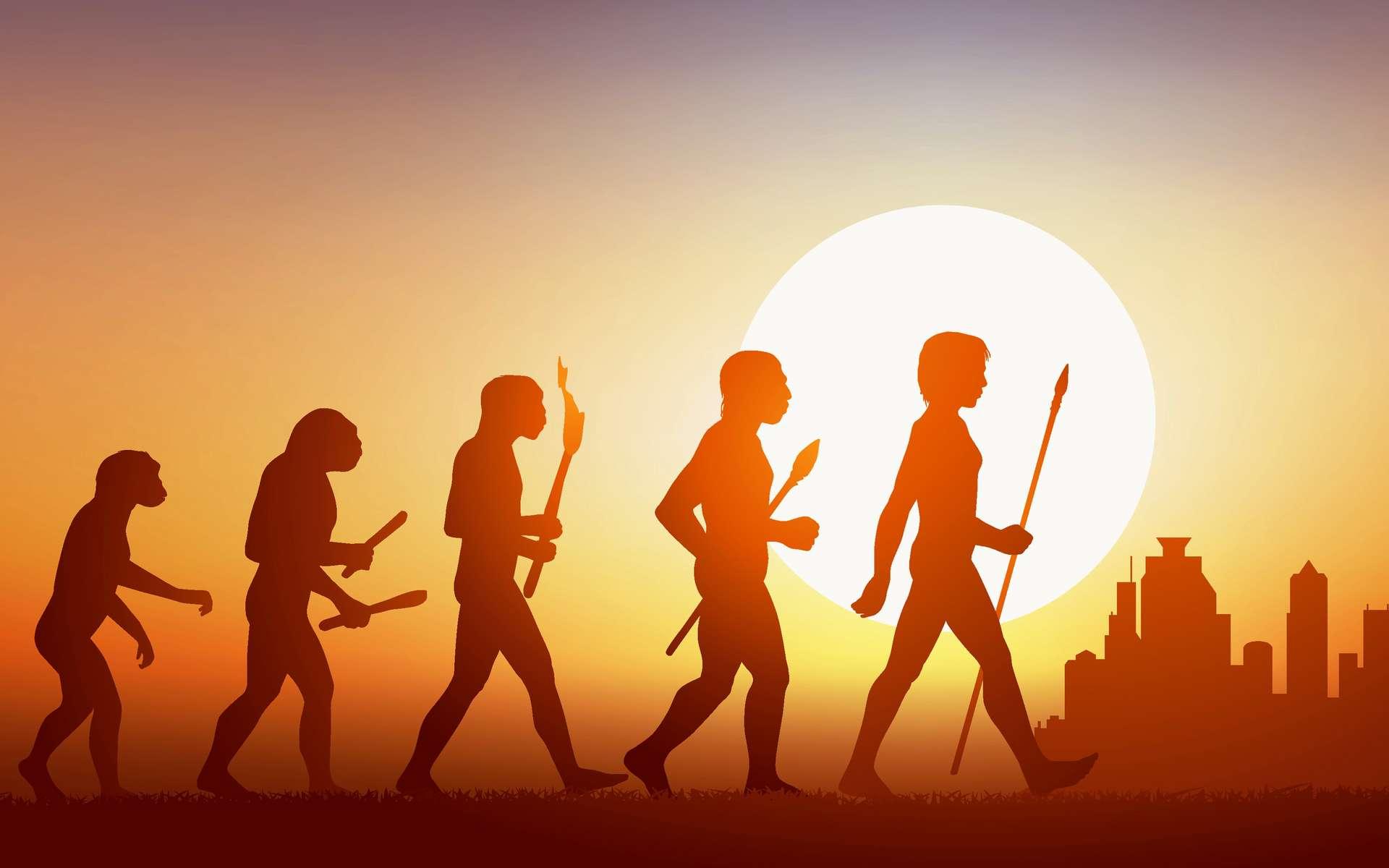 Une vue d'artiste de l'évolution humaine jusqu'à Homo sapiens © pict rider, Fotolia