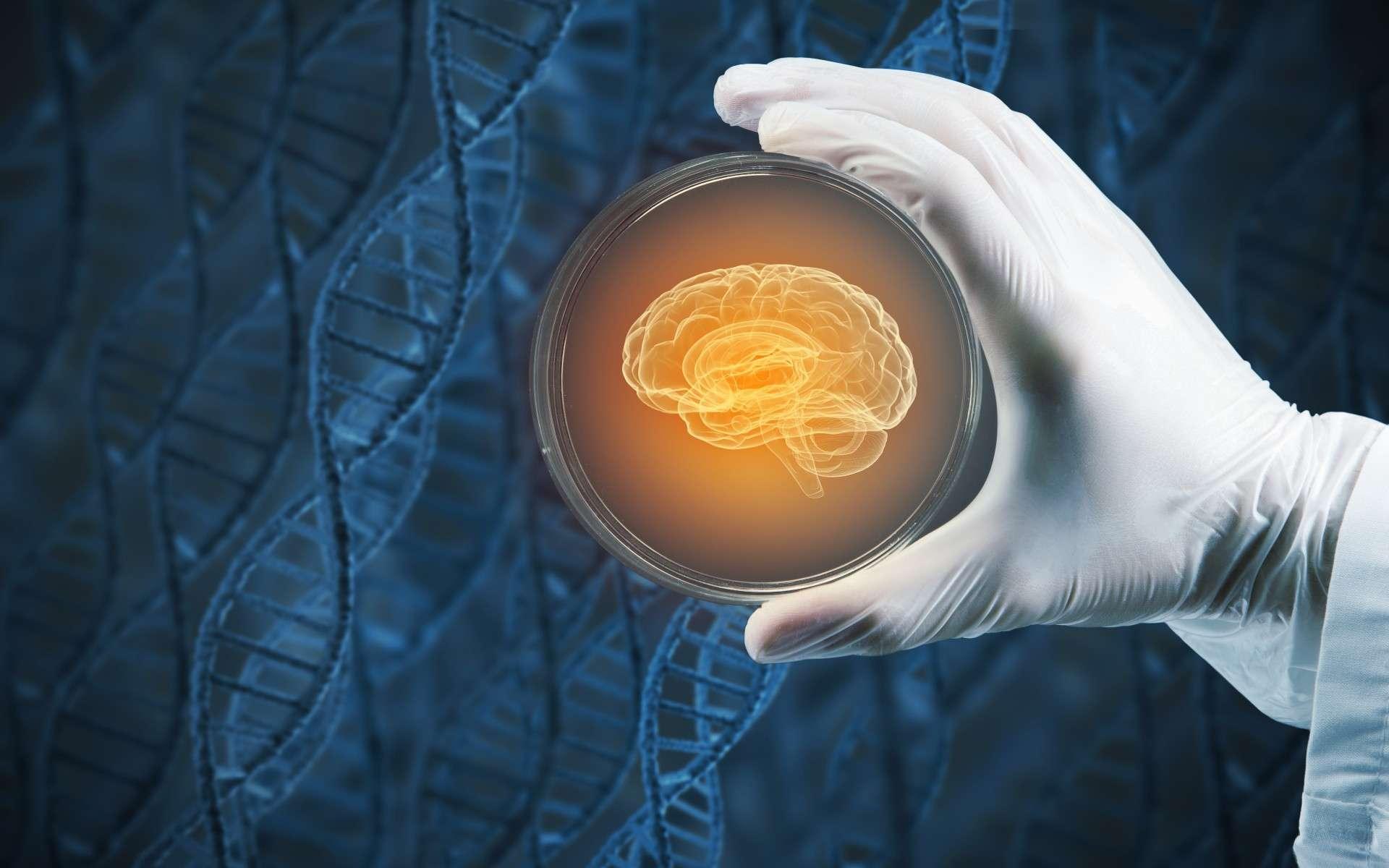 Des scientifiques allemands ont généré des organoïdes cérébraux avec des vésicules optiques capables de sentir la lumière. © Sergey Nivens, Adobe Stock