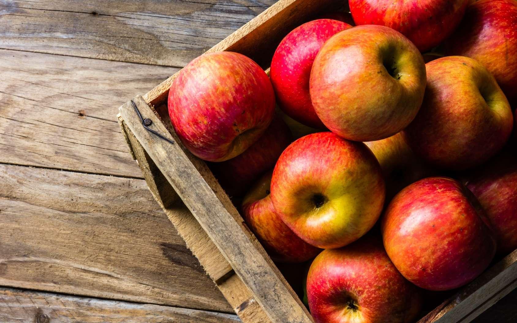 L'automne est la saison à laquelle on récolte les pommes. © lblinova, Fotolia