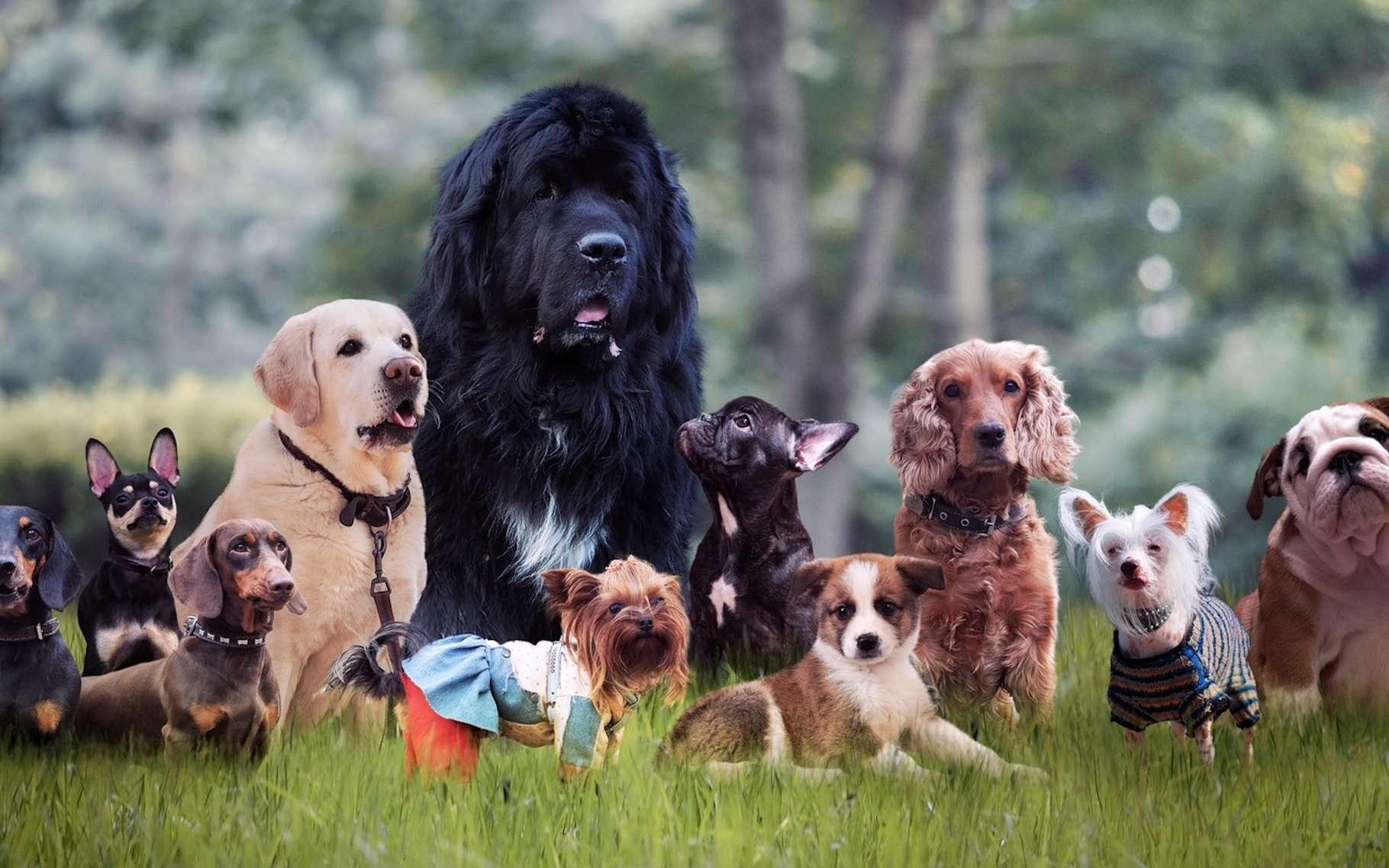 """Résultat de recherche d'images pour """"images chiens"""""""