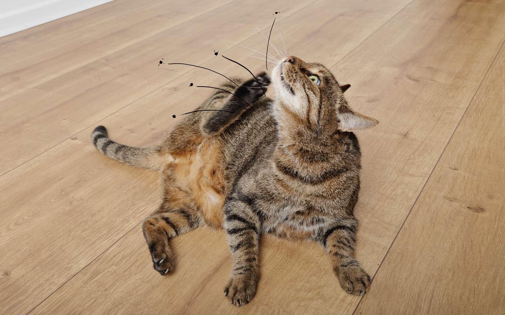Les infestations de puces ont généralement un animal de compagnie pour origine. © mariesacha, Fotolia