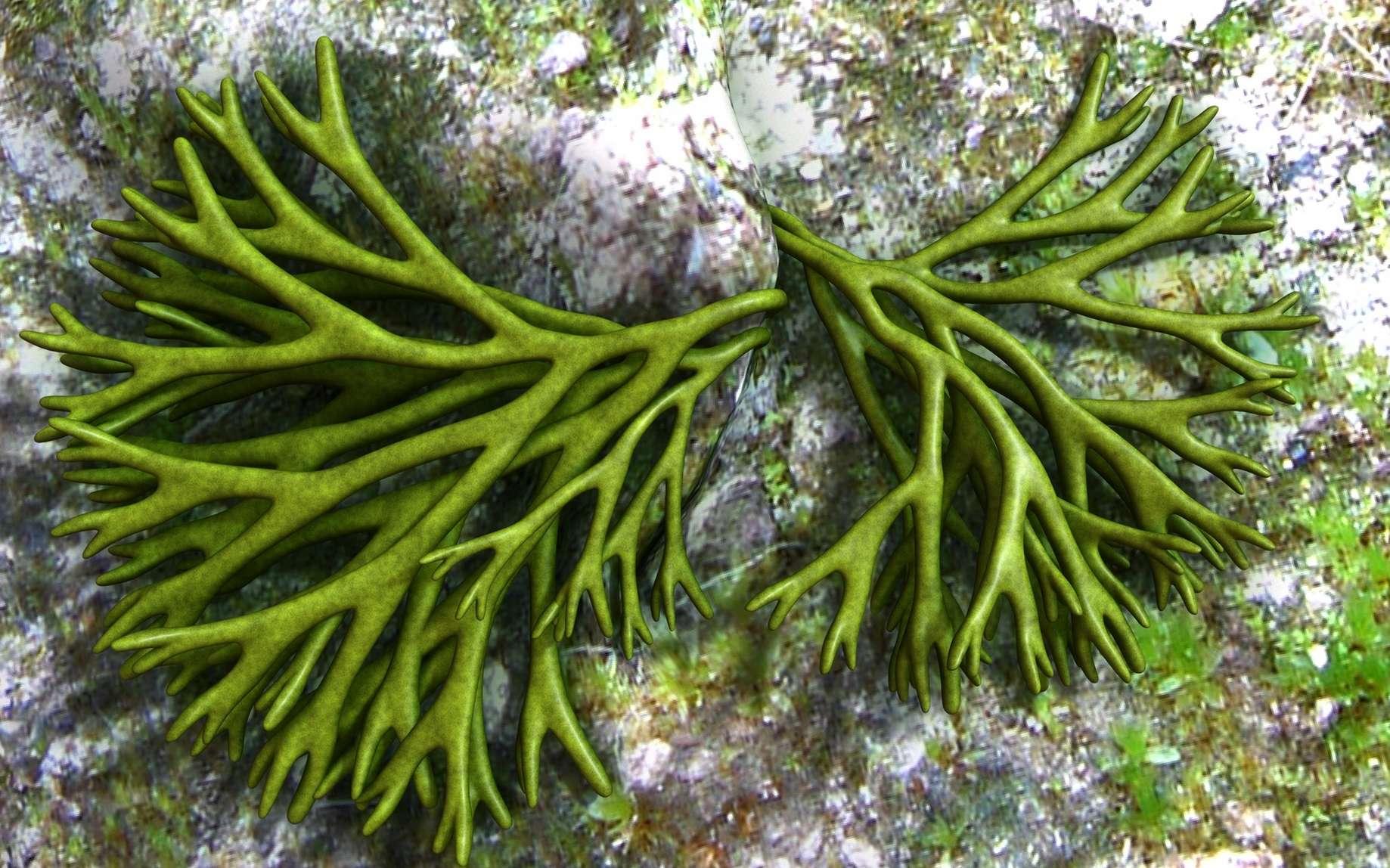 Les thallophytes sont des végétaux simples généralement aquatiques comme les algues. © 7activestudio, Fotolia