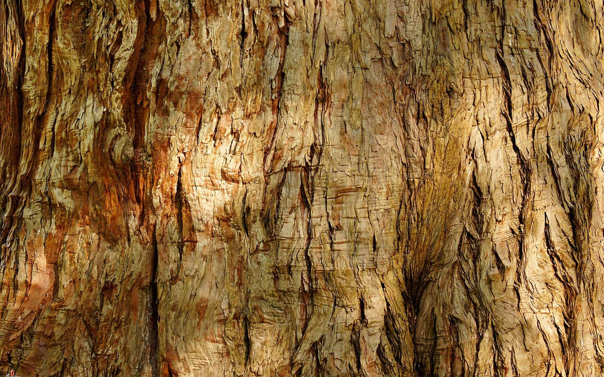 Le bois est un matériau composite dont la matrice est faite de lignine et le renfort, de fibres de cellulose. © laurentmorand, Flickr, CC by-NC-ND 2.0