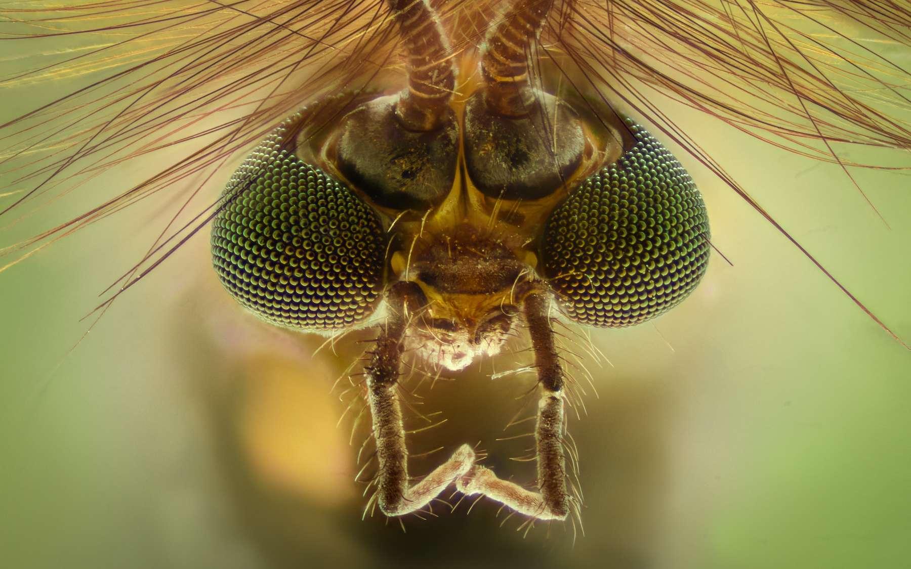 Les moustiques distinguent très mal les couleurs mais sont attirés par les couleurs sombres. © constantincornel, Adobe Stock