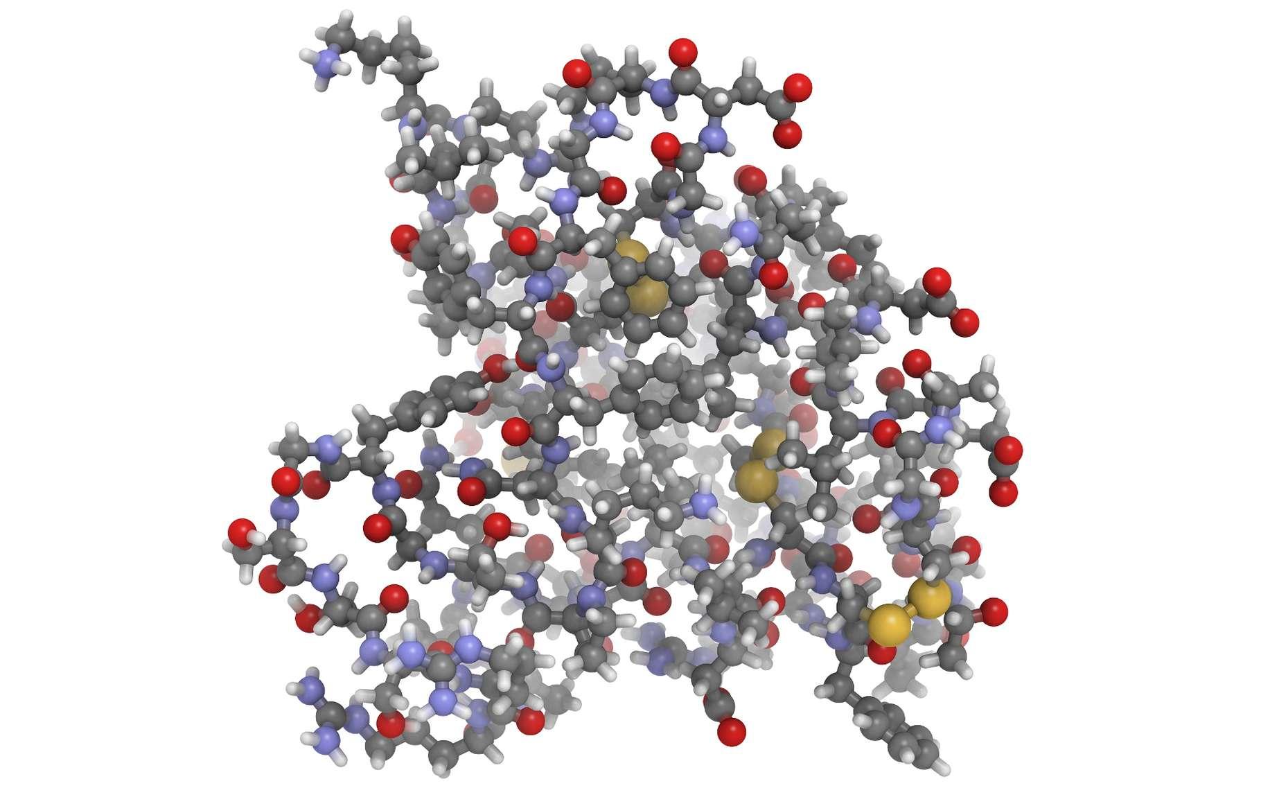 La structure de l'IGF-1 présente des points communs avec celle de la proinsuline. © molekuul_be, Shutterstock
