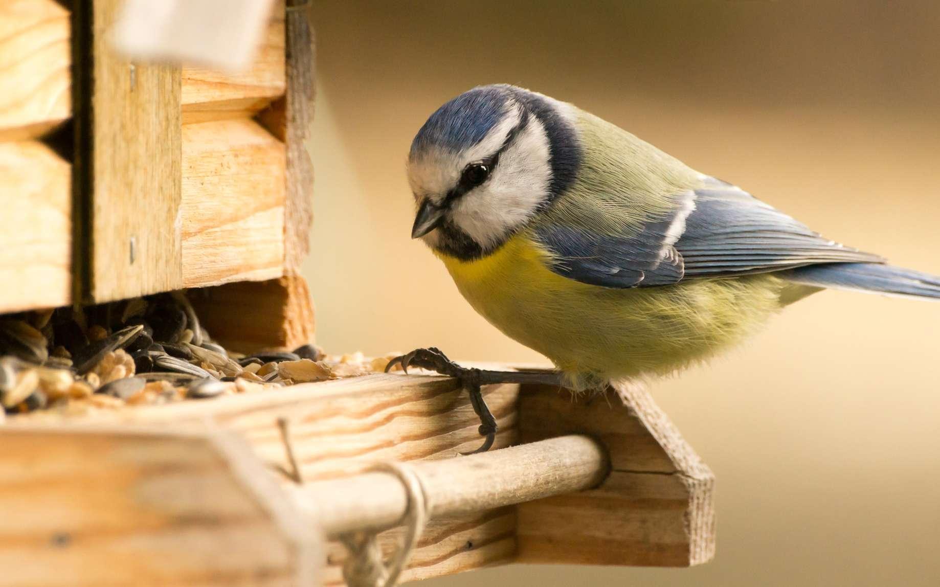 Si le nourrissage des oiseaux est relativement consensuel en hiver, il est plus controversé en été. © moquai86, fotolia