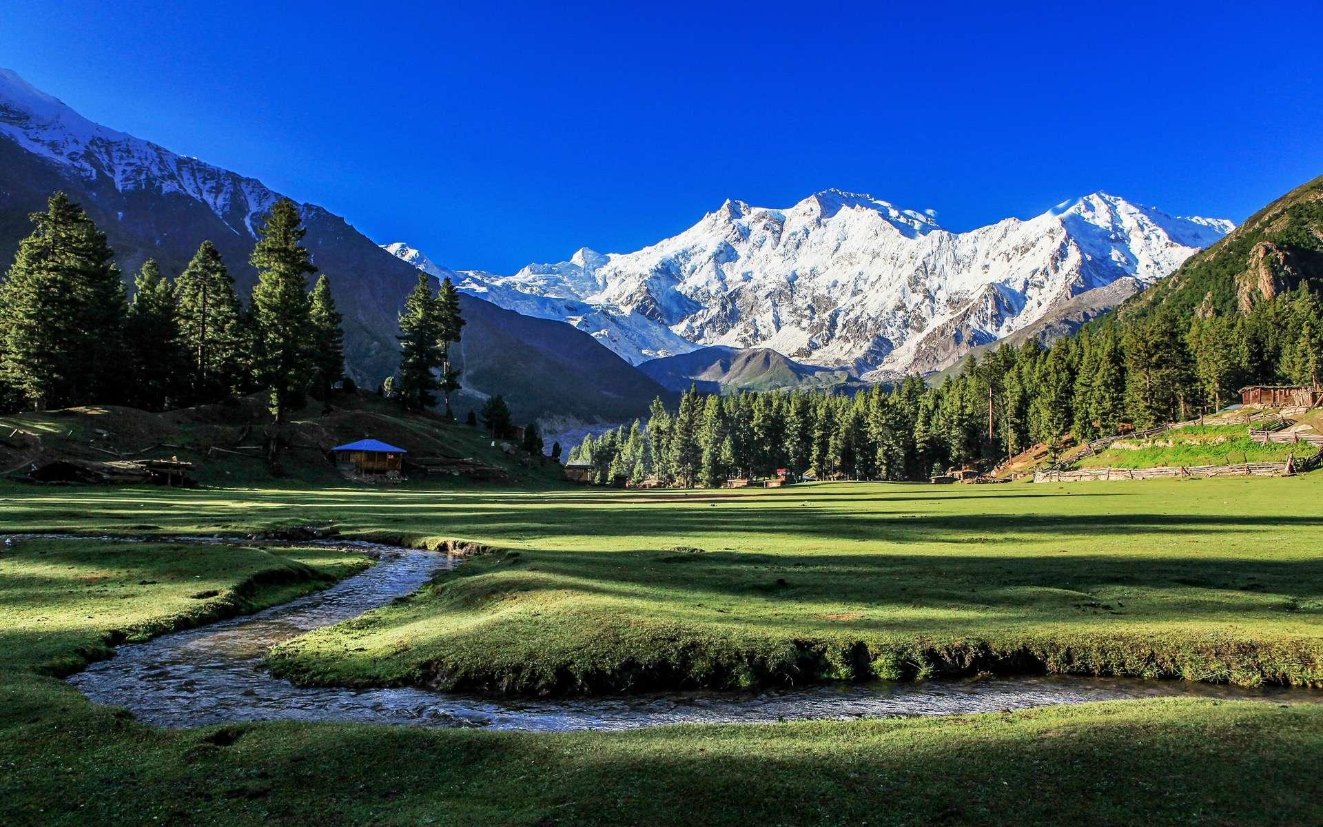 Pour la Journée mondiale de l'environnement, le Pakistan et son projet « tsunami d'arbres » sont à l'honneur. © Wit.Siri, Adobe Stock