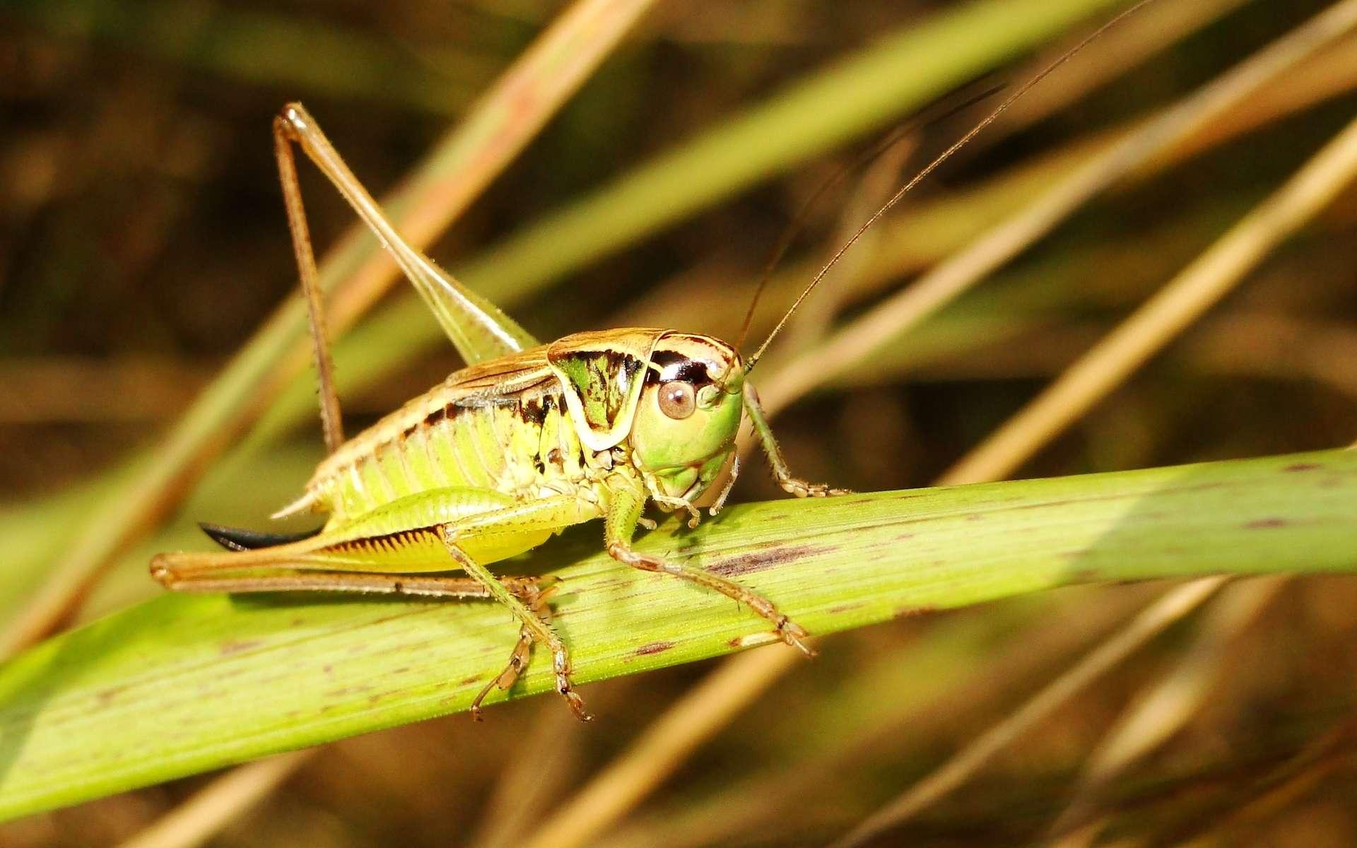 Des insectes porteurs de virus pour modifier les chromosomes de plantes ciblées. © Krzysztof Niewolny, Unsplash