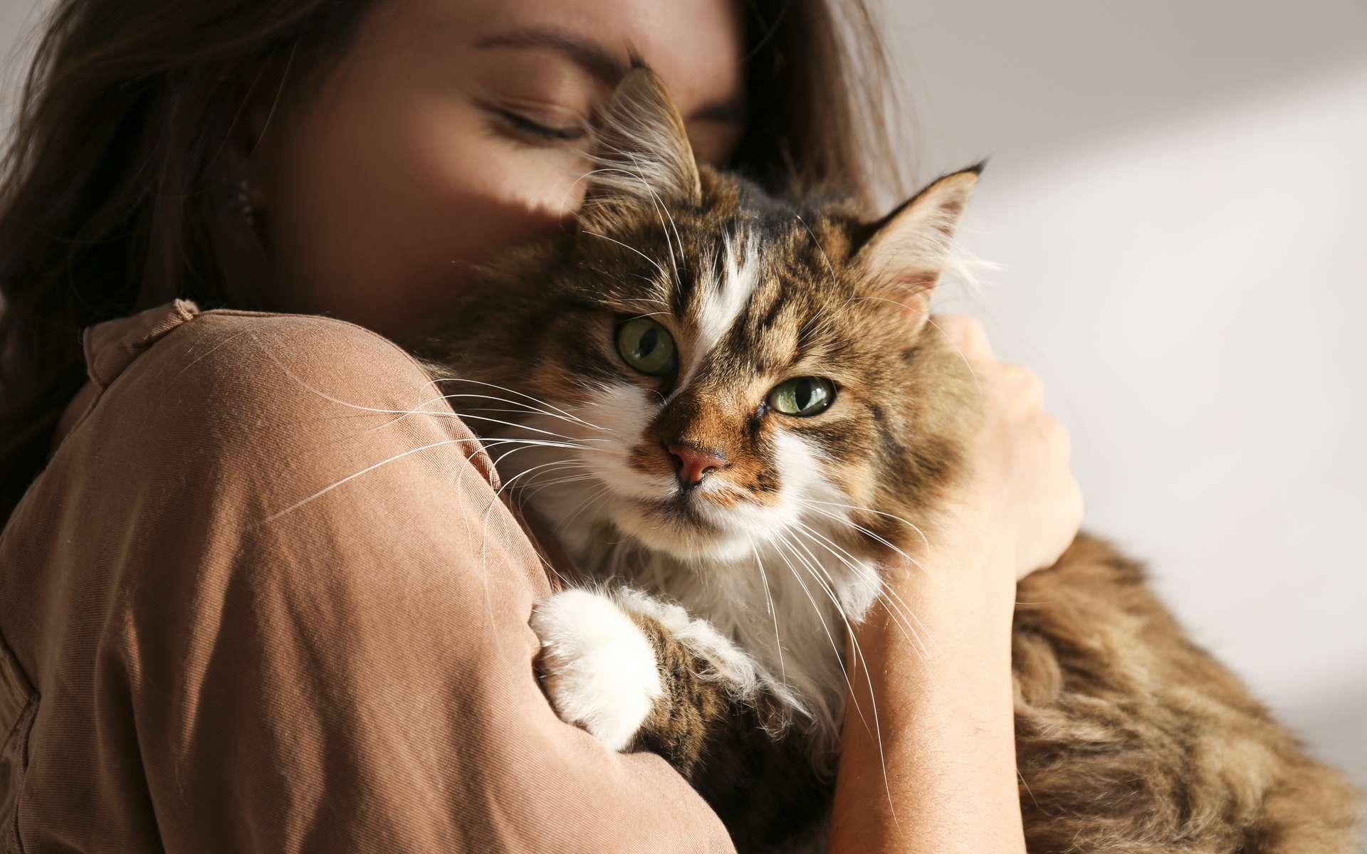 Comment le chat perçoit-il son humaine ? © Evrymmnt, Adobe Stock