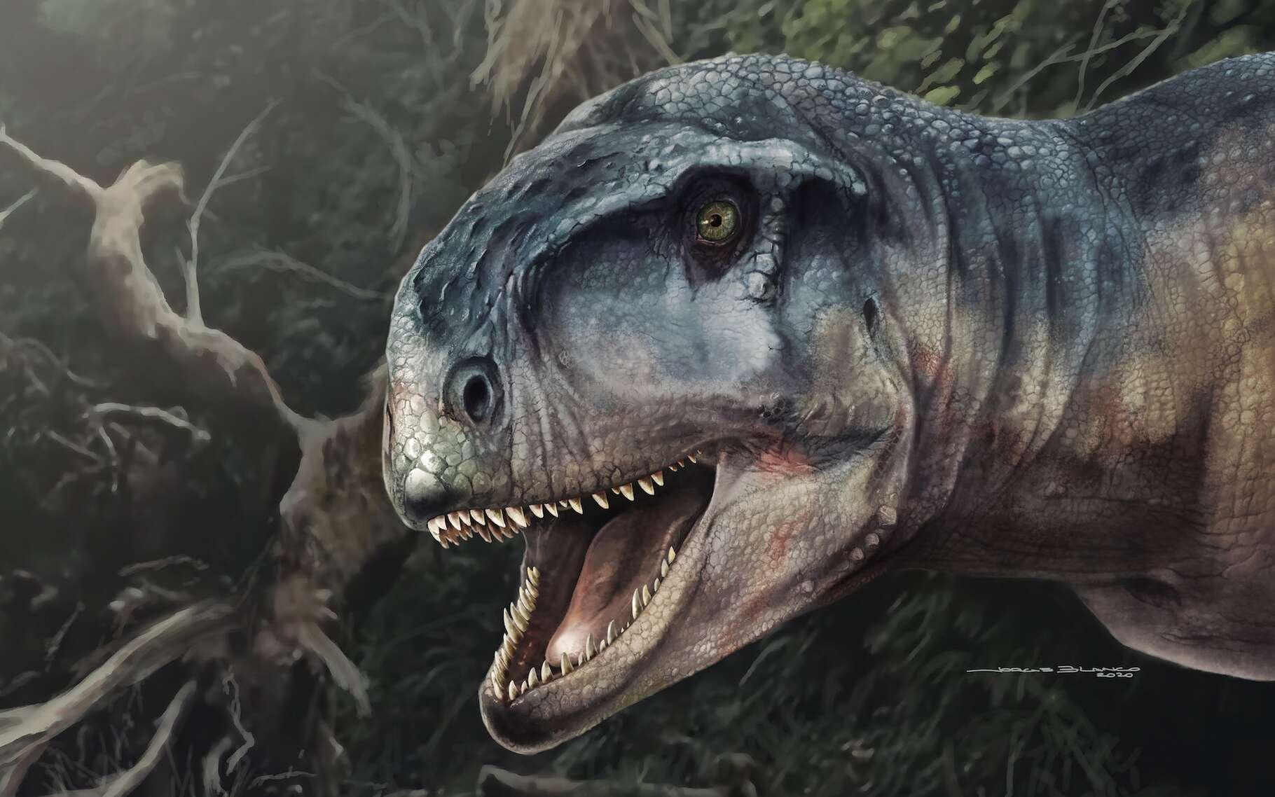 Une vue d'artiste du dinosaure récemment découvert en Patagonie (Argentine). Baptisé « celui qui fait peur », il devait être un redoutable prédateur. © Jorge Blanco, Journal of Vertebrate Paleontology