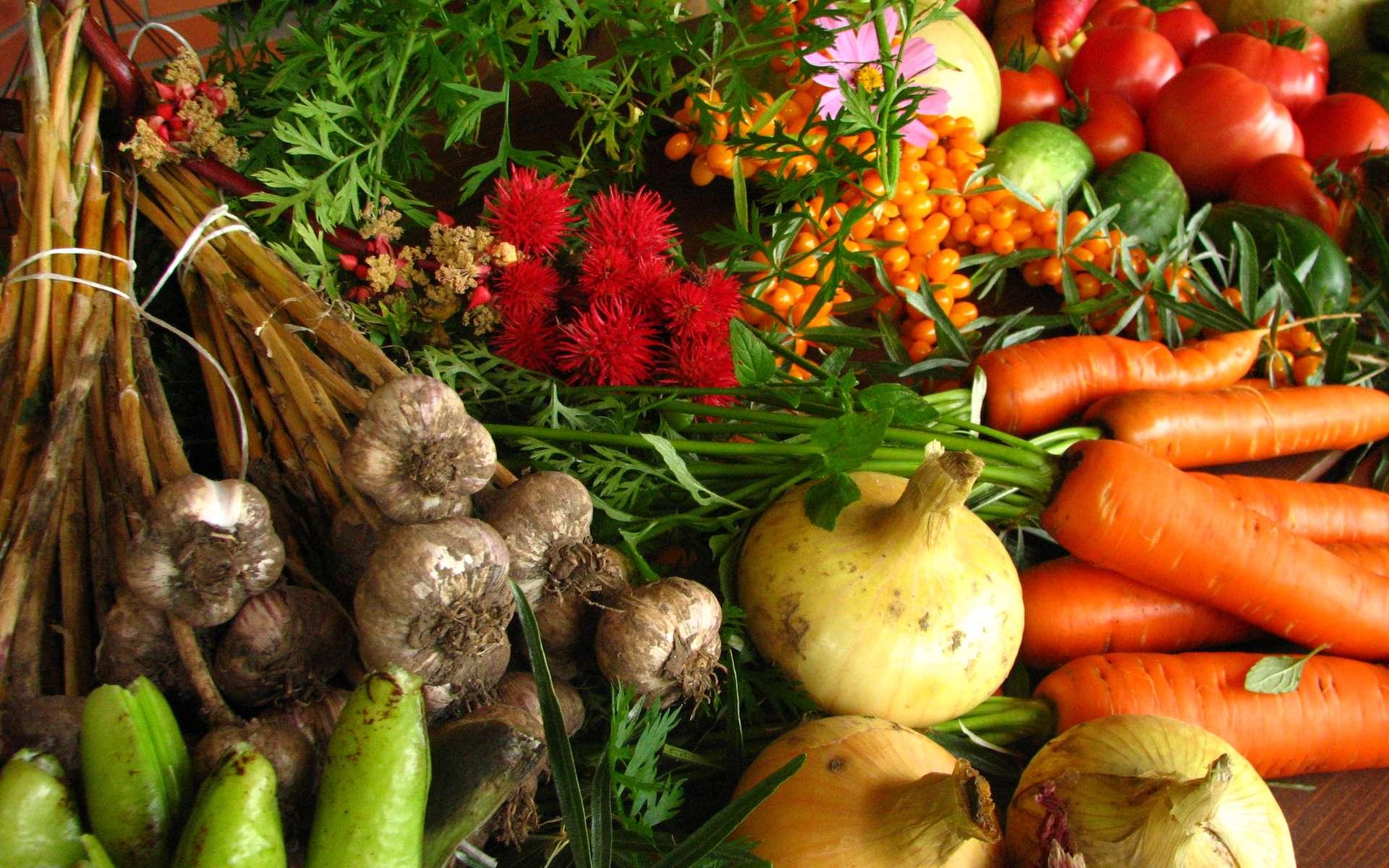 Qu'est-ce que la permaculture ? Ici, un panier de légumes. © Elina Mark