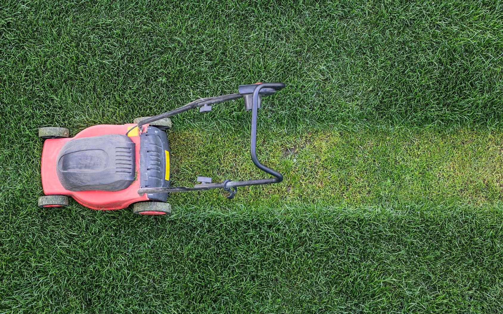 Comment bien tondre la pelouse ? © Serg Salivon, Fotolia