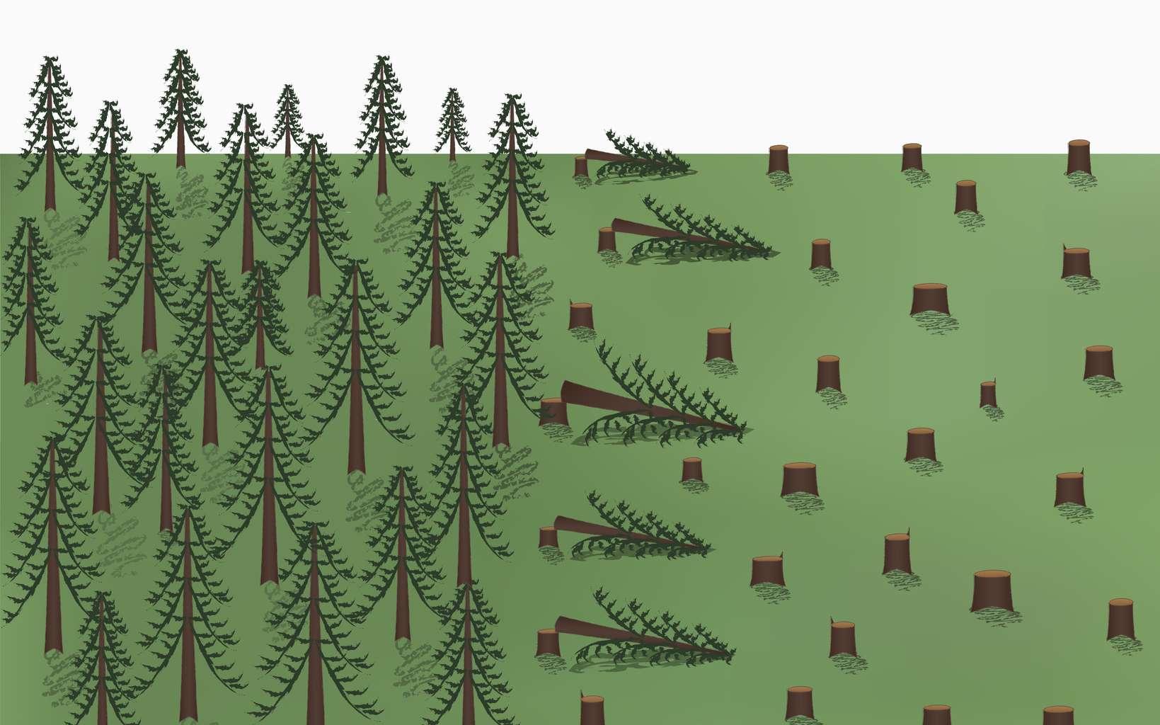 Déforestation : 27 % des 300.000 km2 de forêt perdue chaque année sont permanents. © Tanya Rusanova, Fotolia