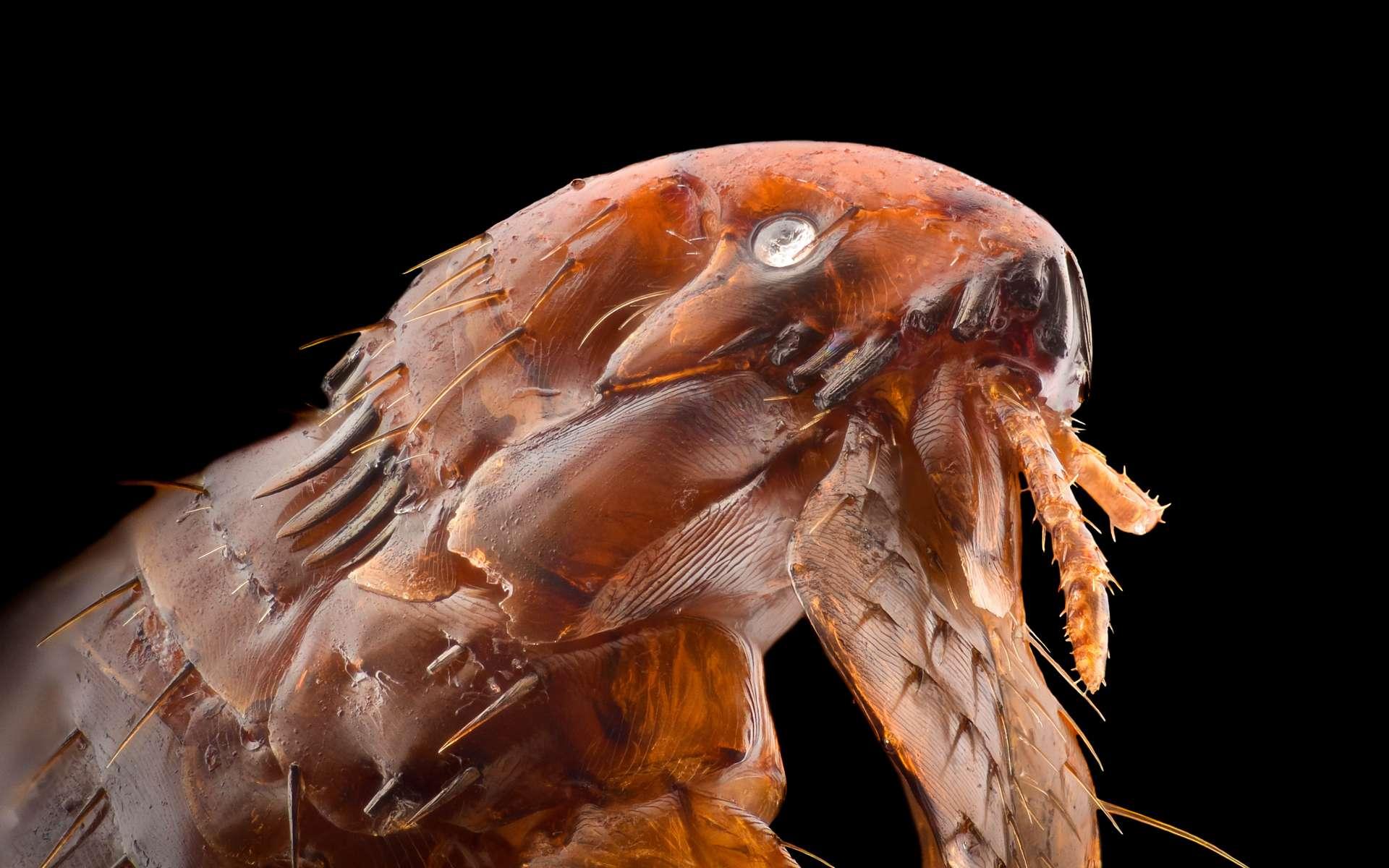 Un parasite est un organisme qui vit aux dépens d'un autre, son hôte. © Constantincornel, Adobe Stock