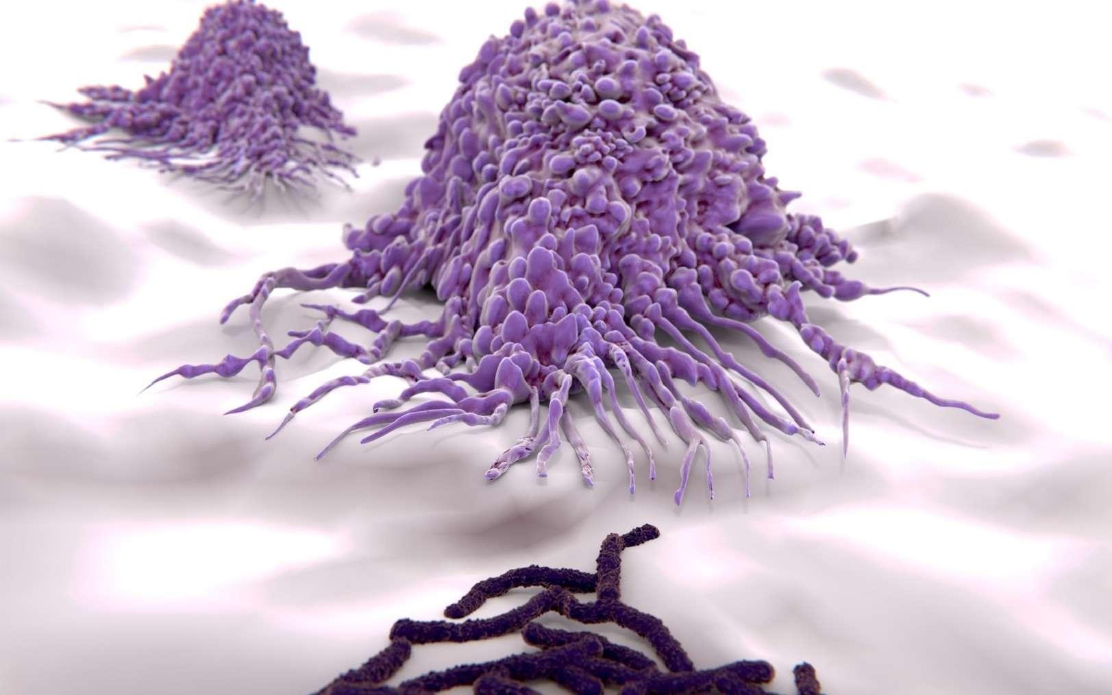 Le macrophage est une cellule qui réalise la phagocytose. © Juan Gärtner, Fotolia