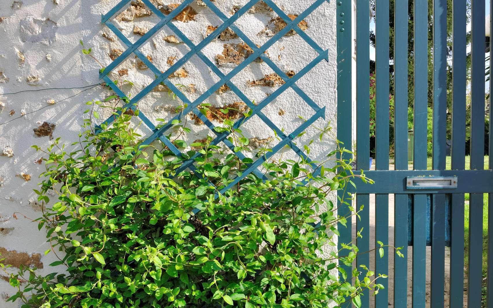 Comment installer un treillage dans un jardin ? Ici, du chèvrefeuille sur un treillage. © coco, Fotolia