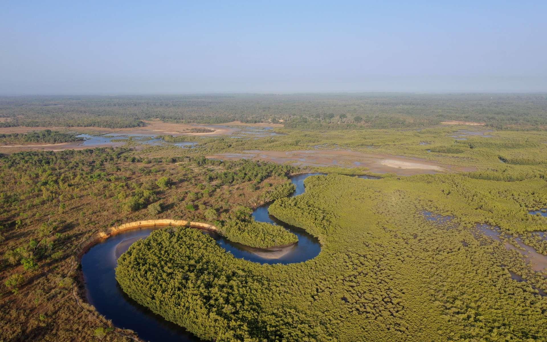 En juillet 2018, une mission Vigilife a collecté une vingtaine d'échantillons dans le fleuve Casamance, au Sénégal. © Jean-Baptiste Decotte