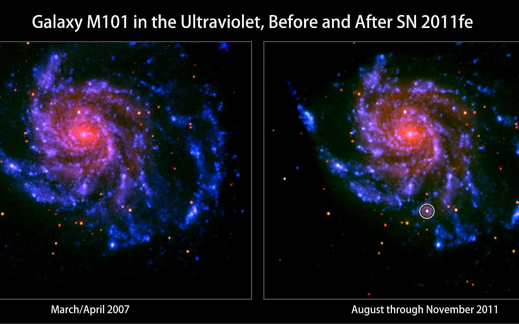 La galaxie spirale M101 observée en 2007 à gauche et en novembre 2011 à droite. La supernova SN 211 fe est visible en ultraviolet sous la forme d'une seule source ponctuelle. © Nasa/Swift/Peter Brown, Univ. of Utah