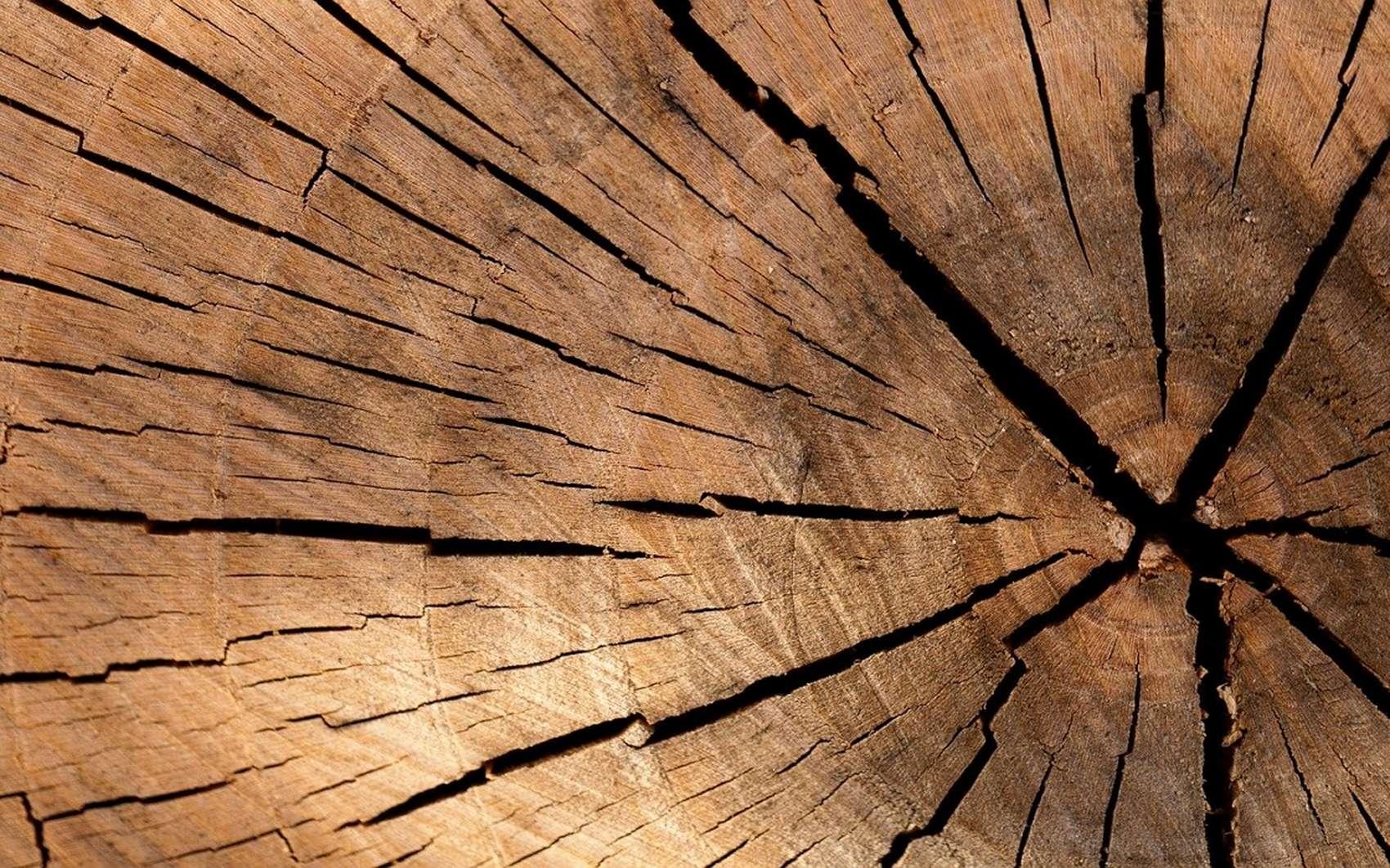 Les bois exotiques sont naturellement plus résistants à l'humidité © Daniel Spase, pxhere.com