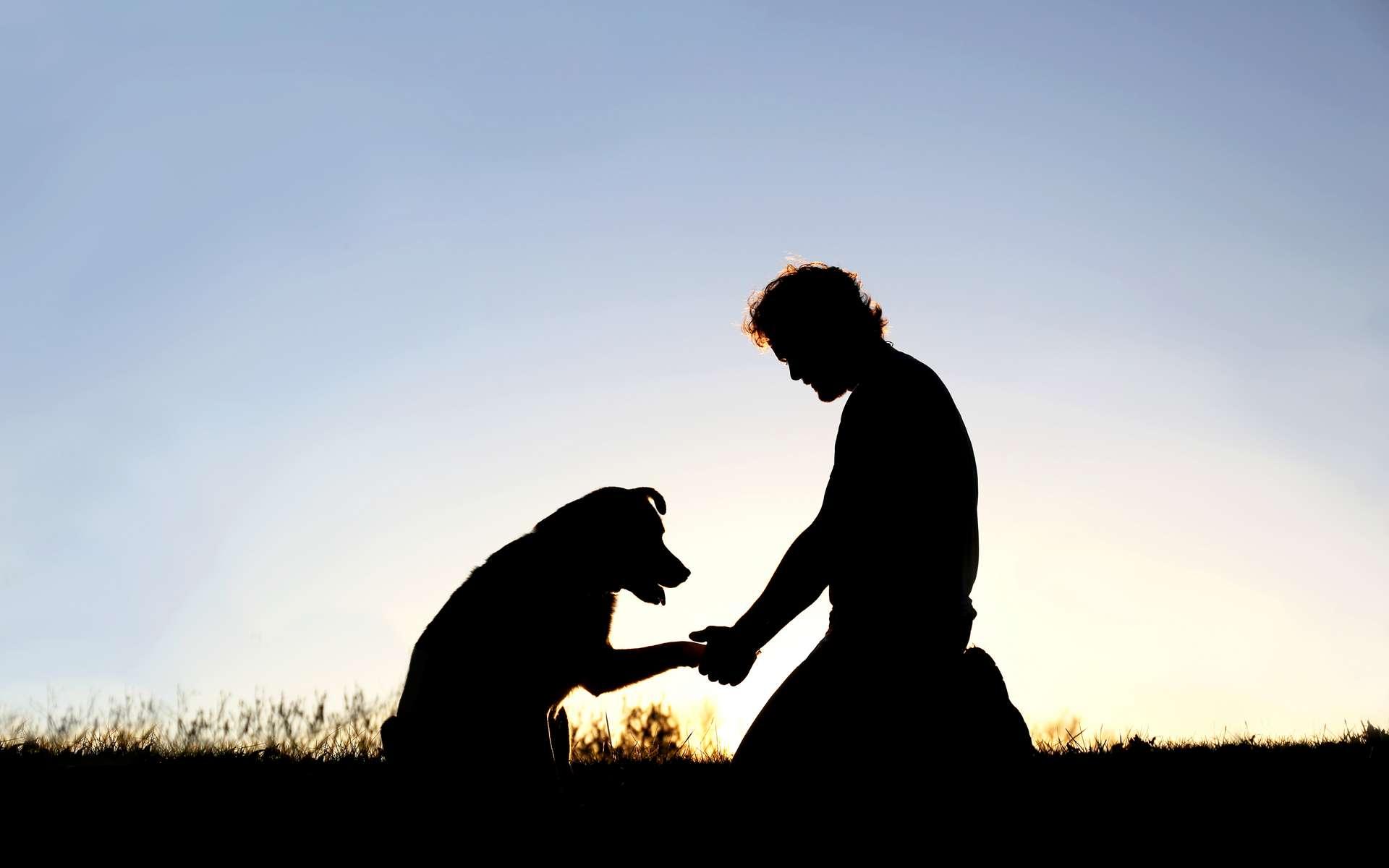 L'histoire humaine est depuis longtemps étroitement liée à celle du chien, ce qui permet de reconstruire les migrations et cultures de l'Homme au cours de plusieurs milliers d'années. © Christin Lola, Adobe Stock