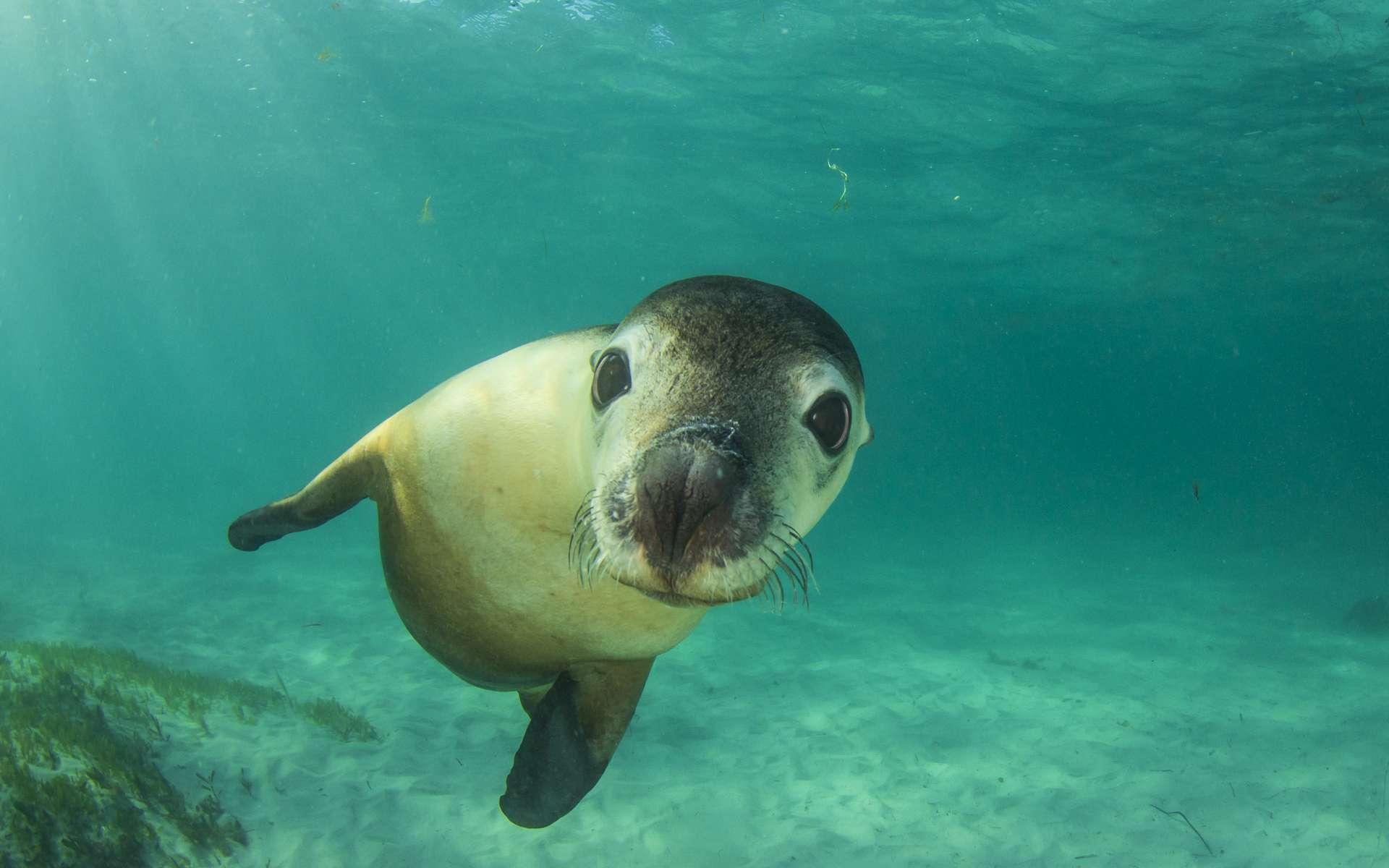 On pourrait restaurer la vie marine d'ici 2050