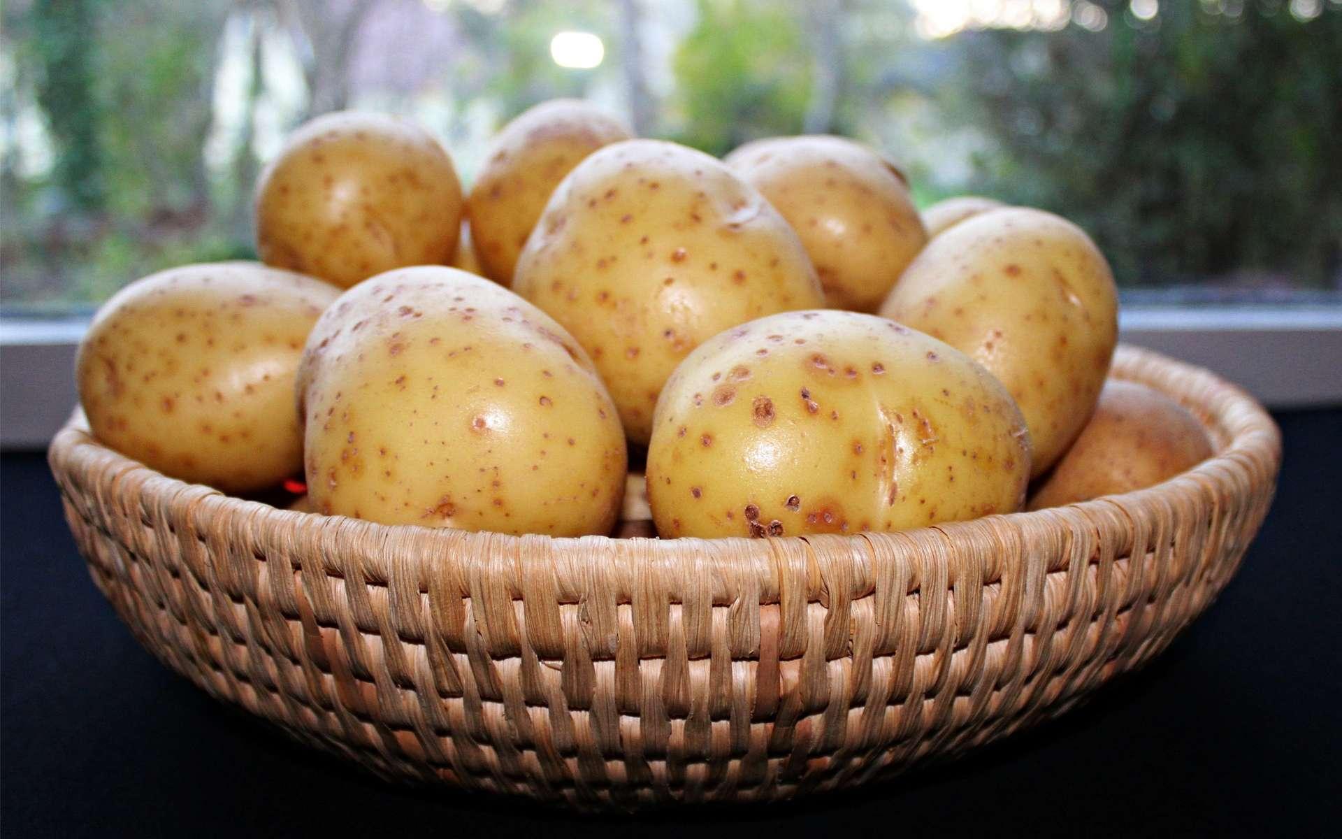 Contrairement aux idées reçues, la pomme de terre est assez pauvre en calories si elle n'est pas accompagnée de sauces ou de graisses. © Pixabay