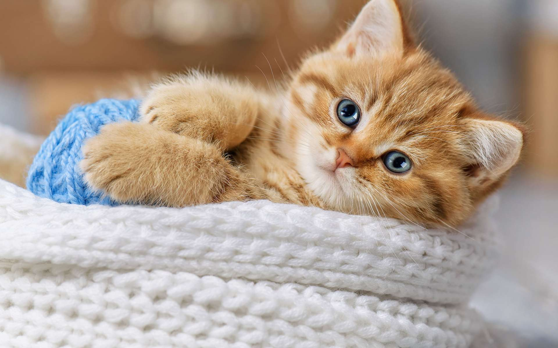 Envie d'adopter un chaton ? Profitez de la Journée mondiale du chat. © Alexandr Vasilyev, Adobe Stock