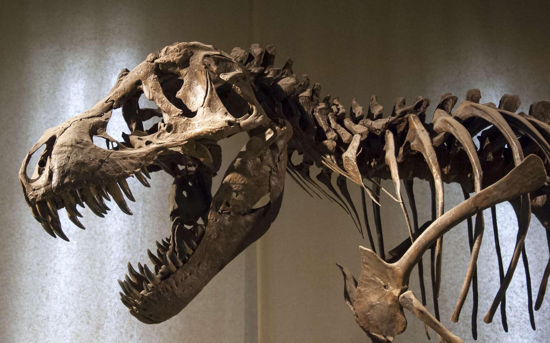 Le grand tyrannosaure, ou T-rex, pouvait courir, chasser et dévorer ses victimes jusqu'au dernier os, grâce à sa terrible mâchoire. Il pouvait aussi se repaître de carcasses d'autres dinosaures, même celles des plus gros. © atm2003, Fotolia