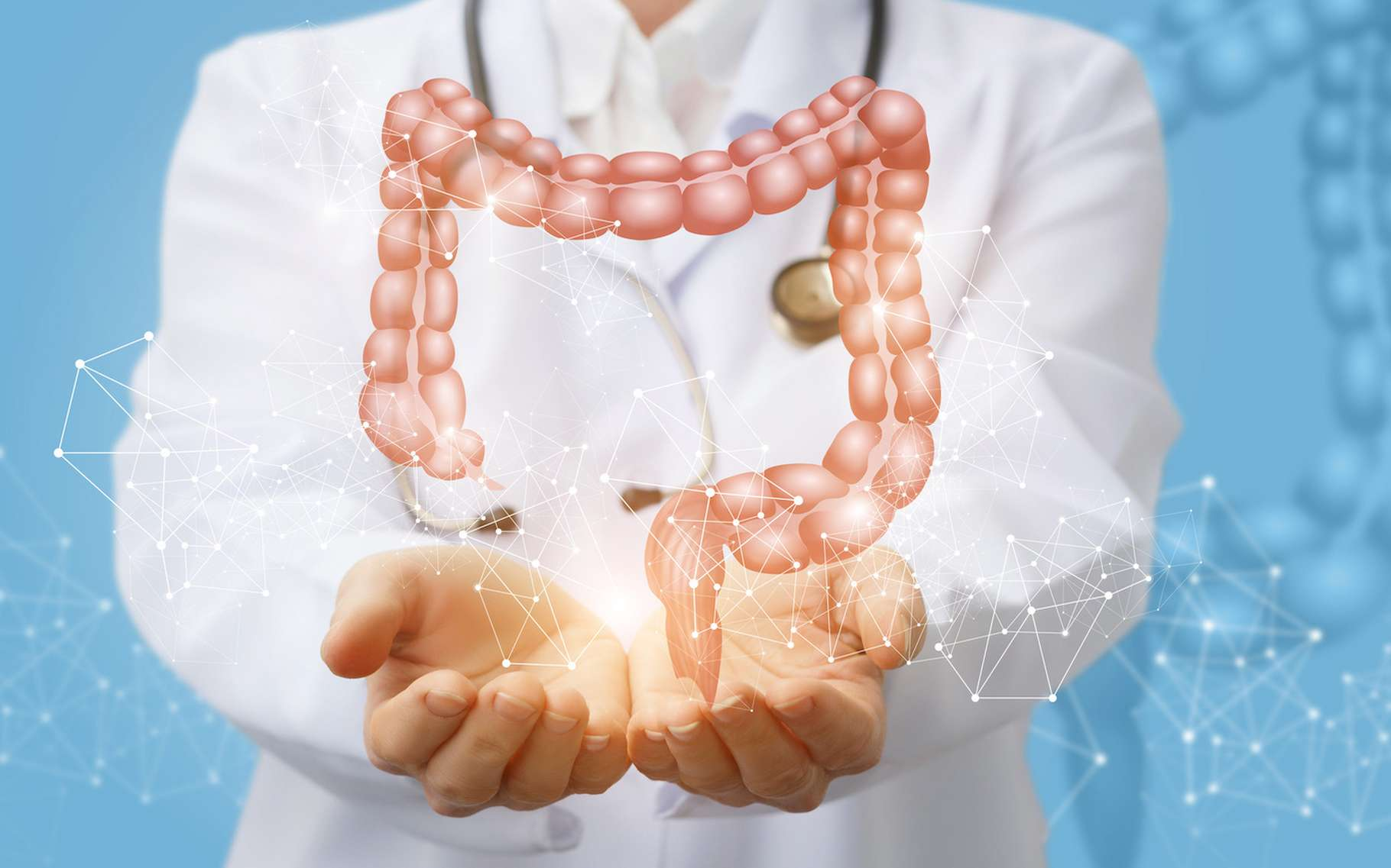 C'est au cœur de l'intestin que des chercheurs français ont découvert une différence physiologique entre hommes et femmes. Une différence qui explique la susceptibilité accrue des hommes à une nourriture riche en sucre. © natali_mis