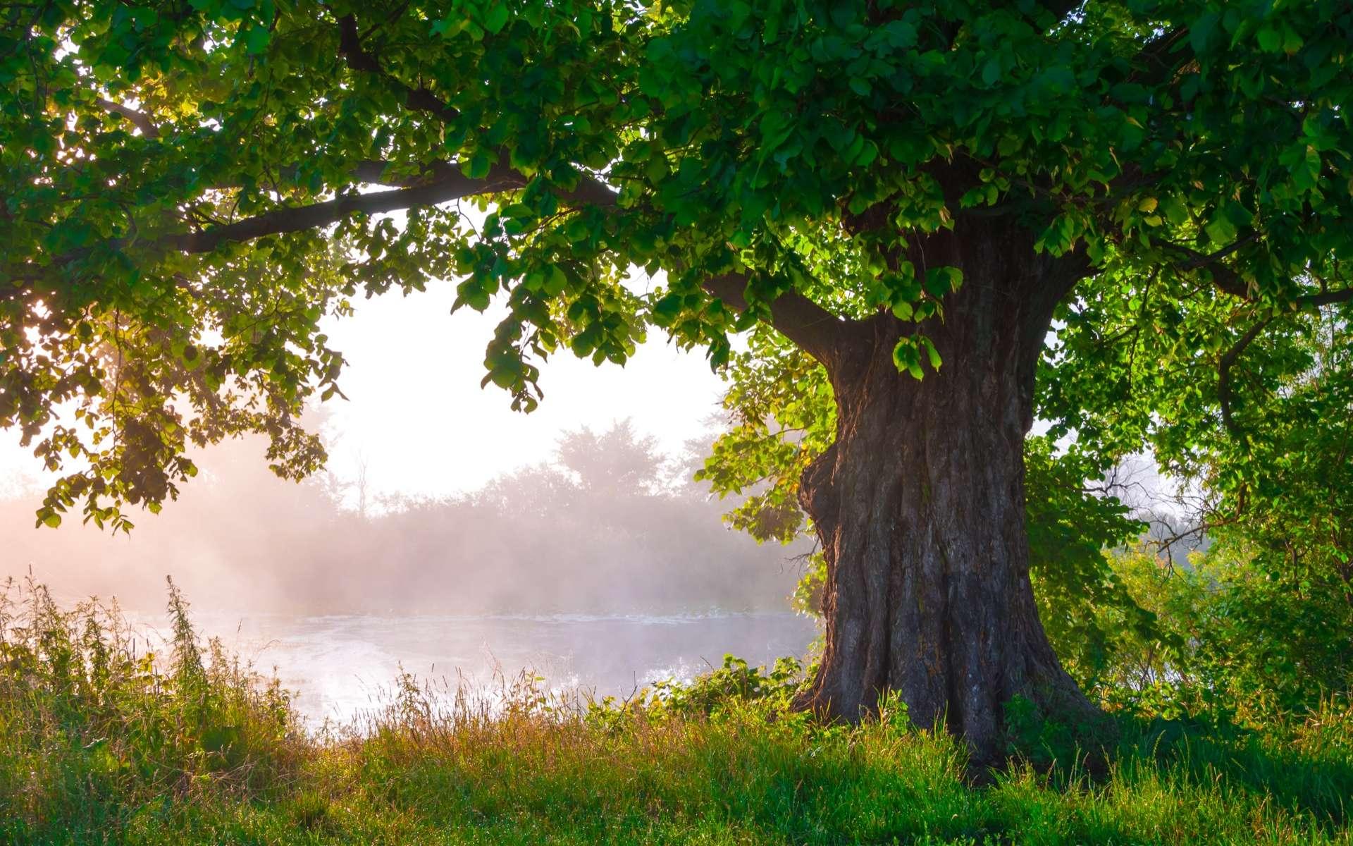 Les animaux pollinisateurs, oiseaux et insectes, fuient les arbres affectés par de la pollution sonore. © DmytroKos, Adobe Stock