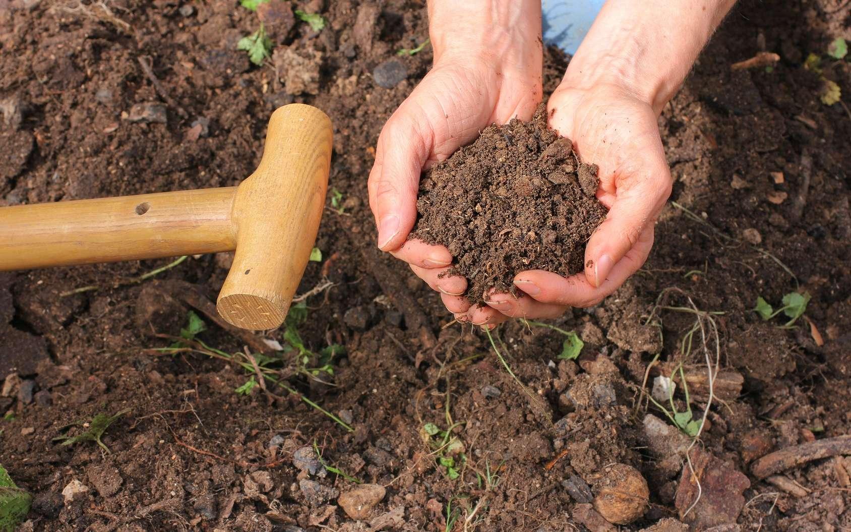 Les bactéries du sol dégradent la matière organique. © Marina Lohrbach, Fotolia