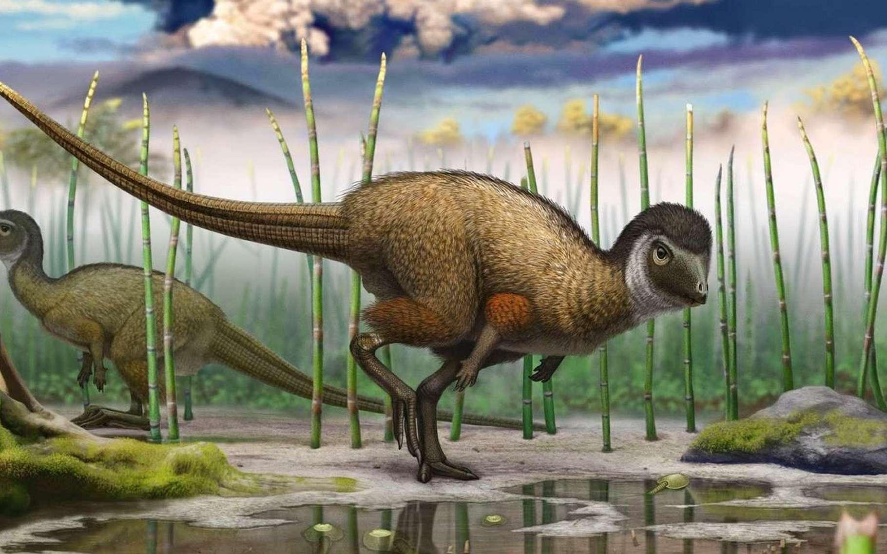 Certains dinosaures se sont couverts de plumes il y a bien longtemps, sans doute il y a plus de 200 millions d'années. Ici, Kulindadromeus zabaikalicus, exhumé à Kulinda, un site bordant la rivière Olov en Sibérie, et qui a vécu entre 144 et 169 millions d'années avant le présent. © Institut royal des Sciences naturelles de Belgique, Andrey Atuchin